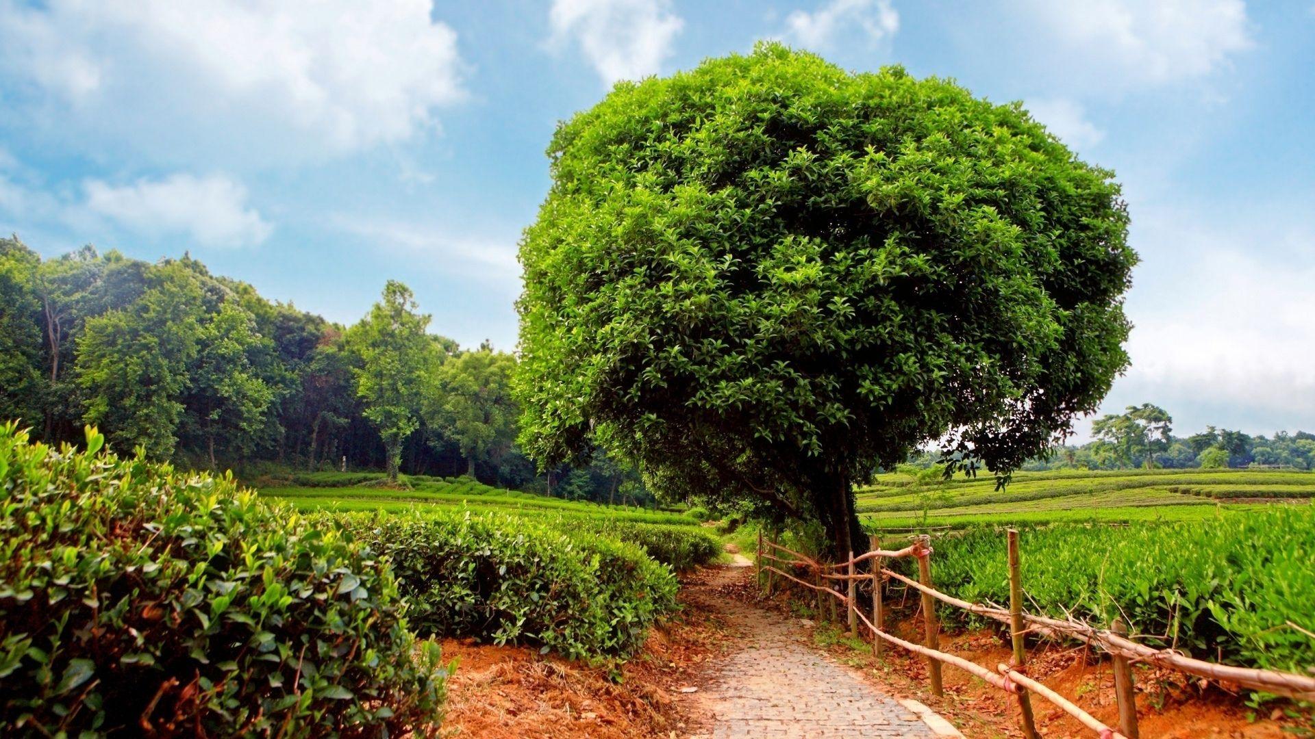 Nature Trees Photo