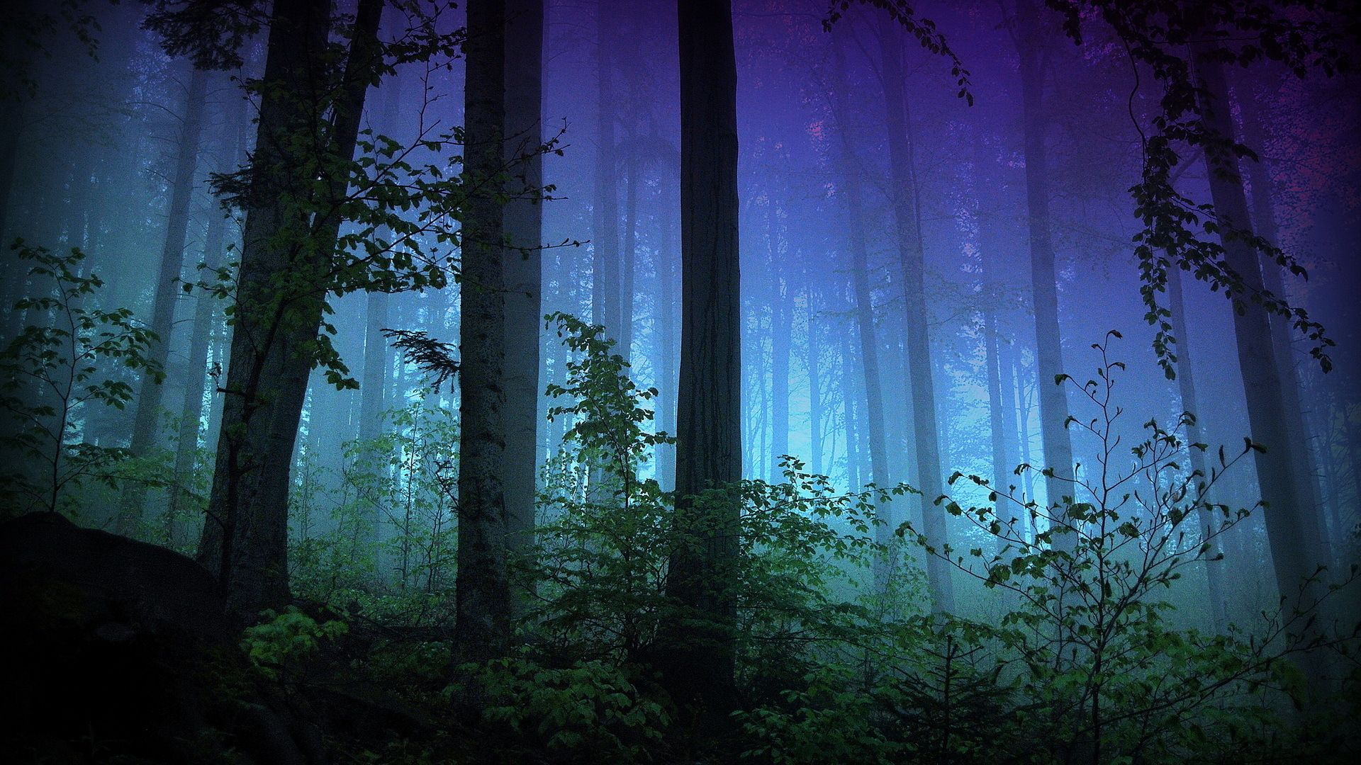 Night Forest Images 2
