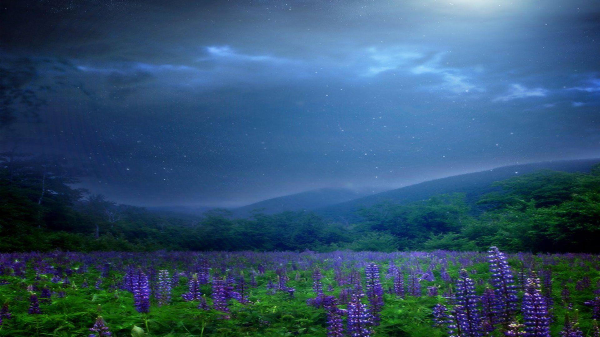 Night Photos Of Nature