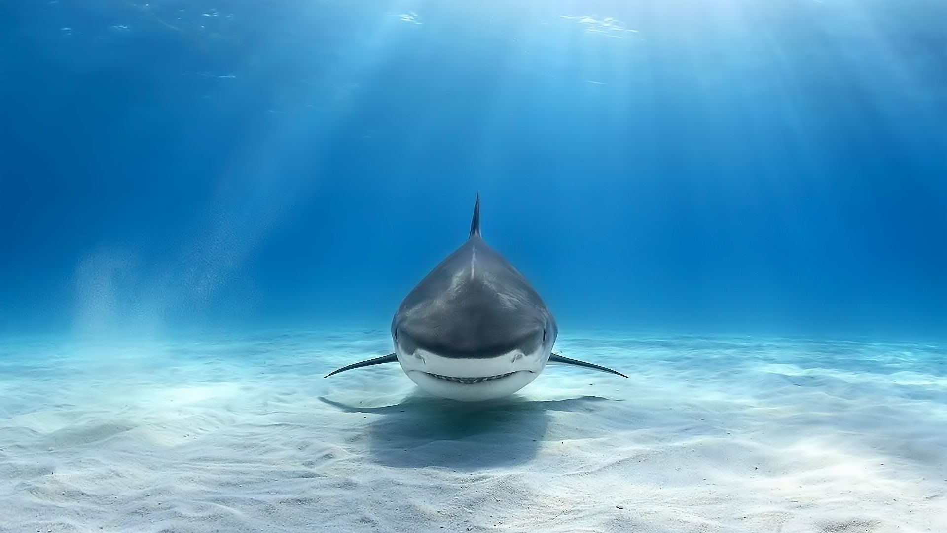 Ocean Photo Underwater With Sharks