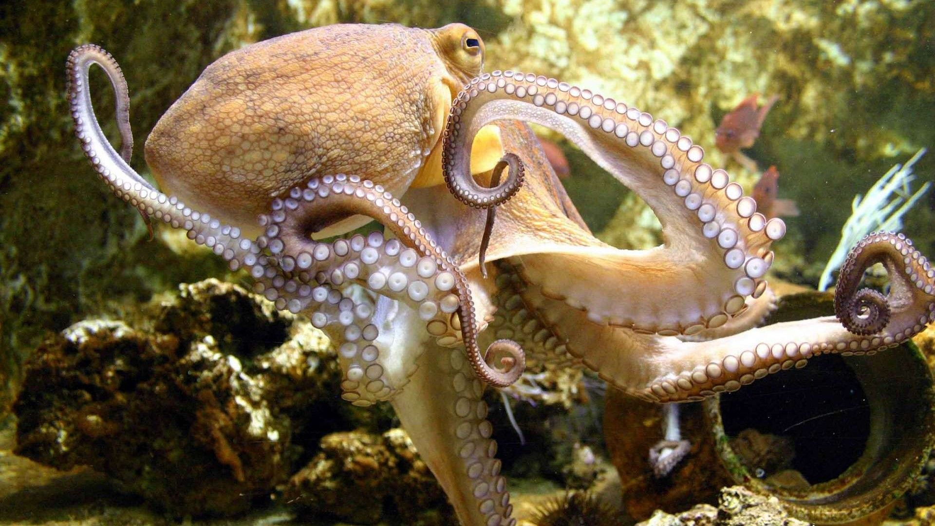 Octopus Pictures