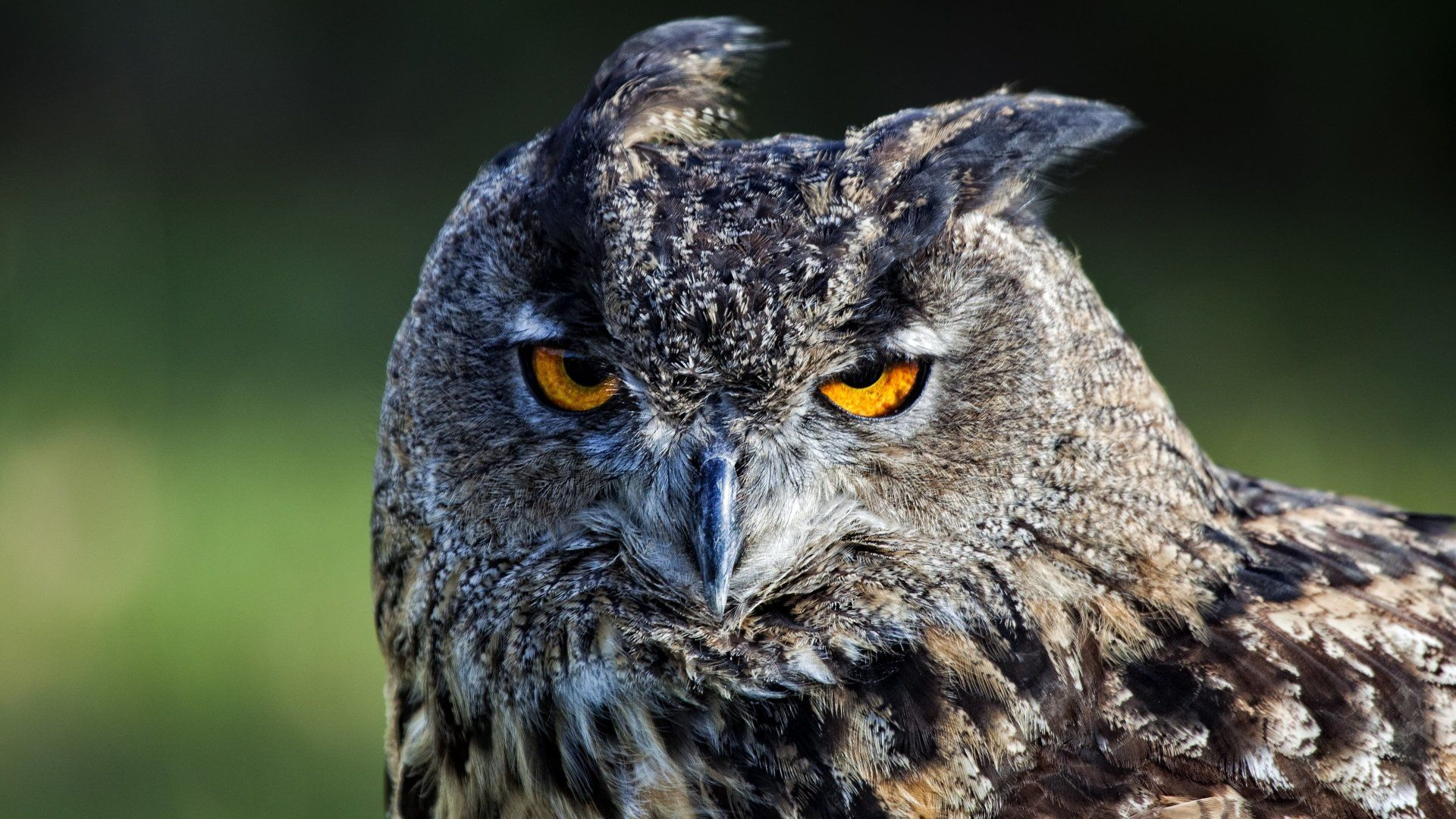 Of Wallpapers Images Owl