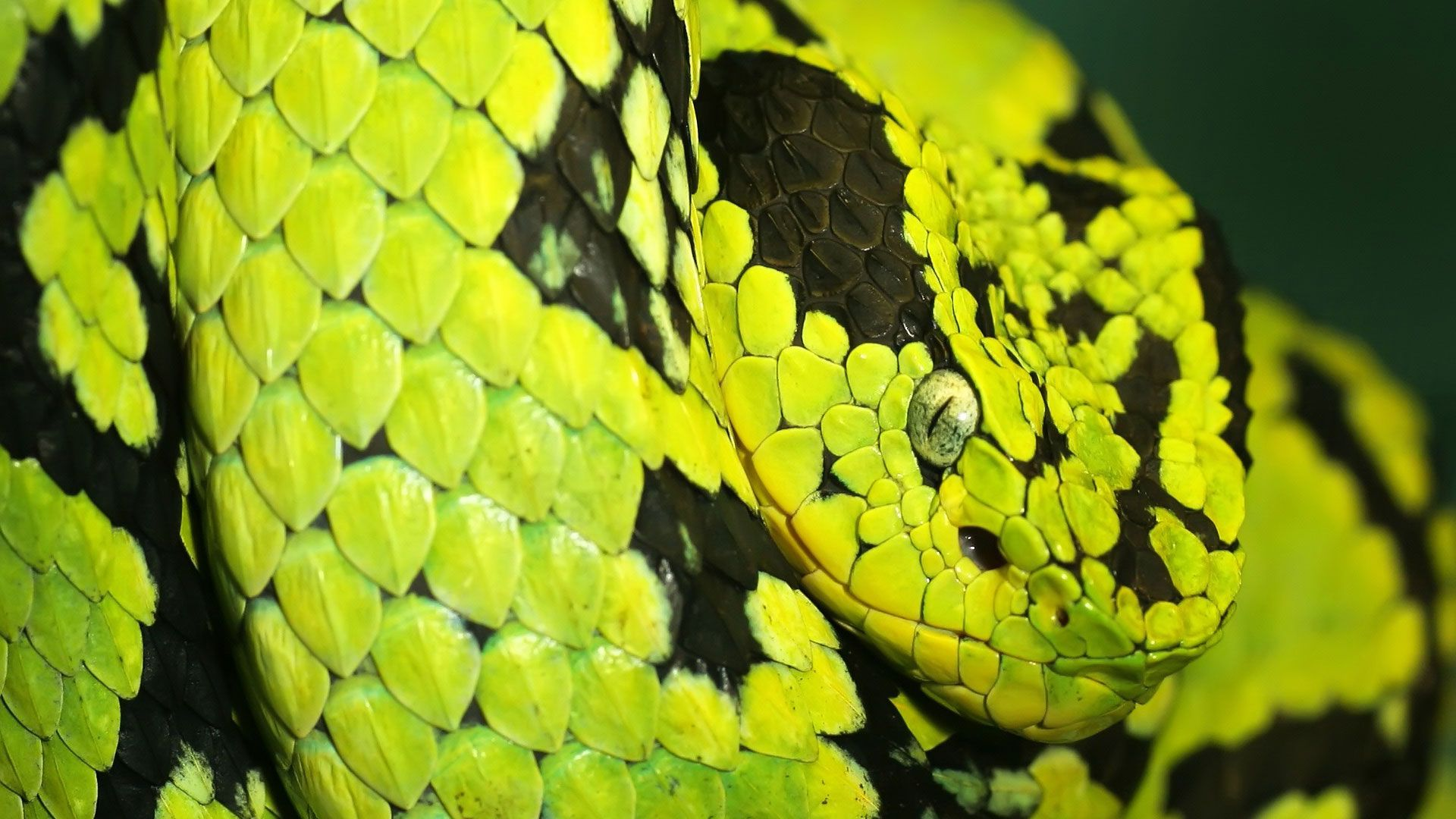 Of Wallpapers Images Snake