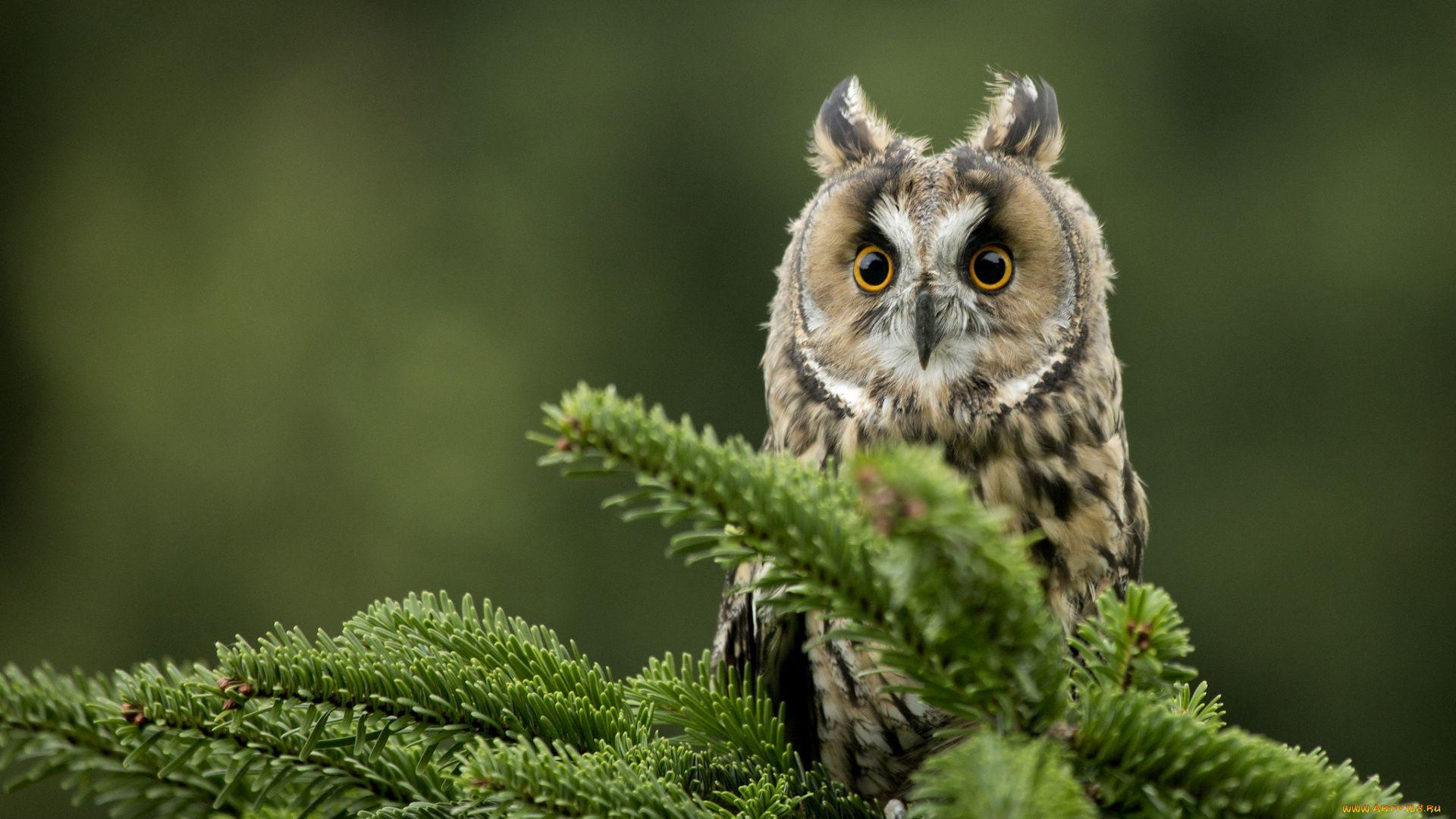 Owl Desktop 1920x1080