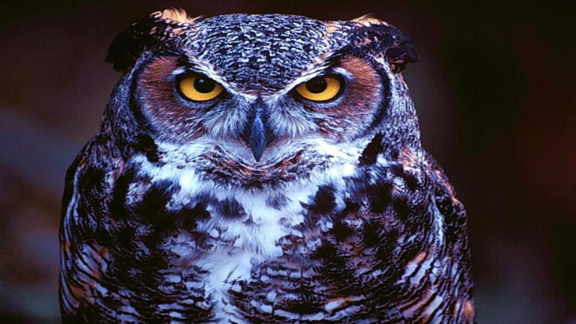 Owl Full Face