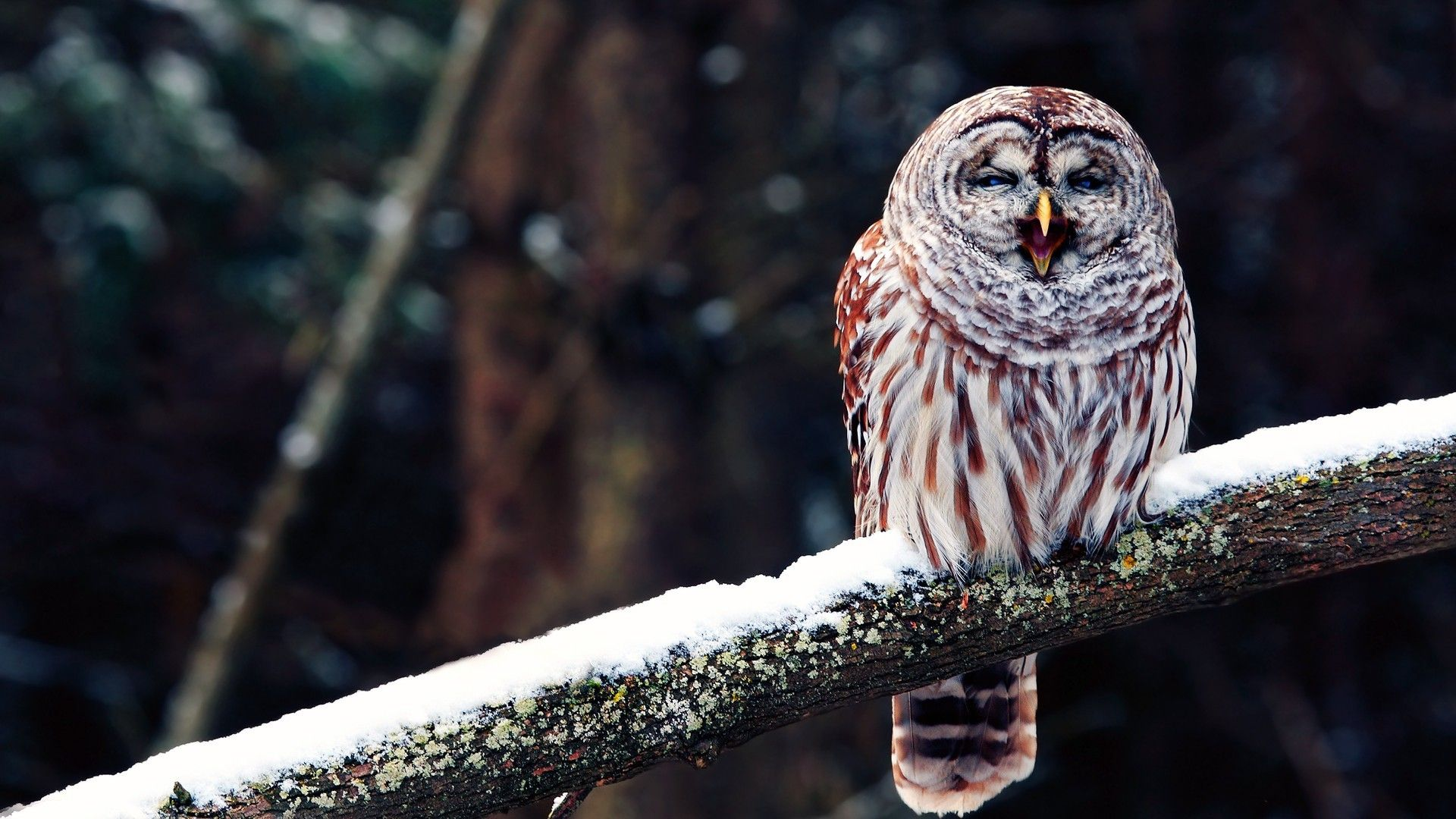 Owl On A Branch Pictures