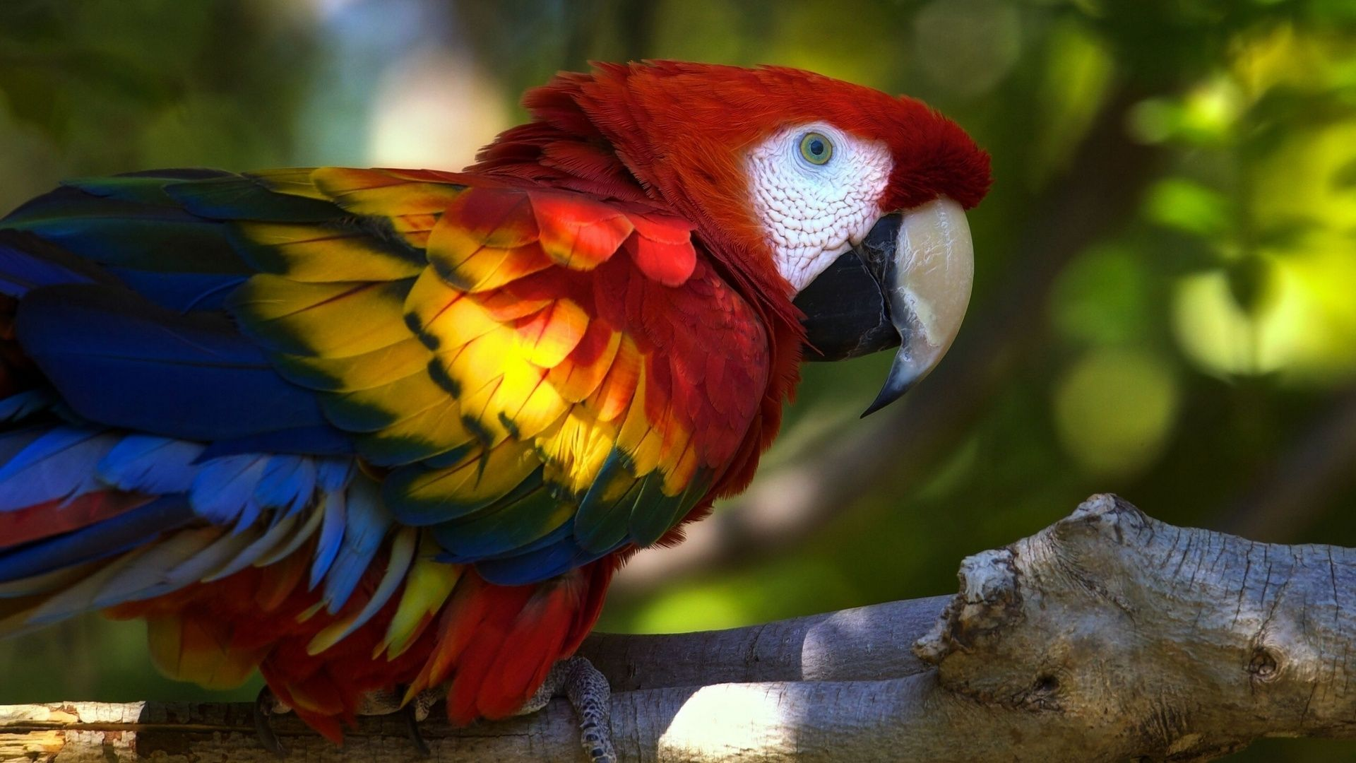 Parrot Macaw 2560