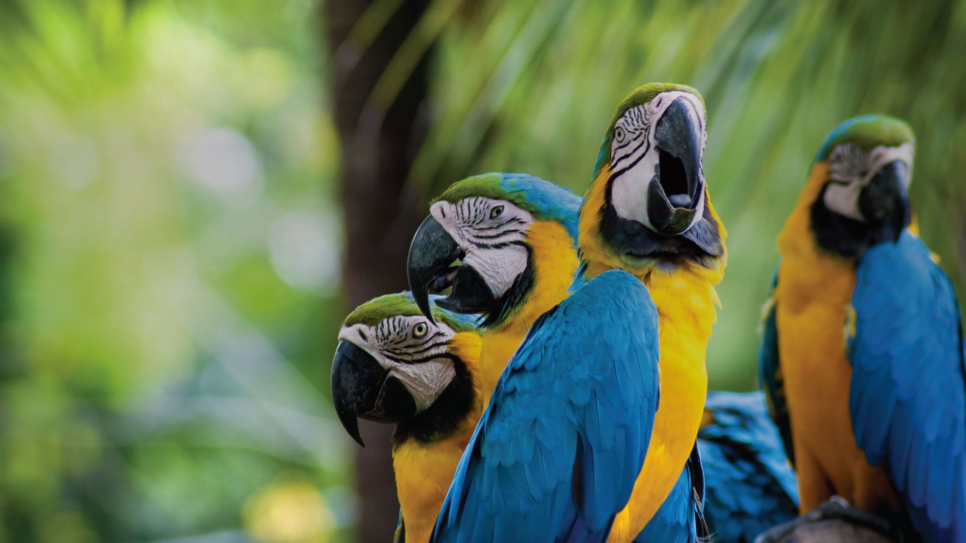 Parrot Macaw Wallpaper