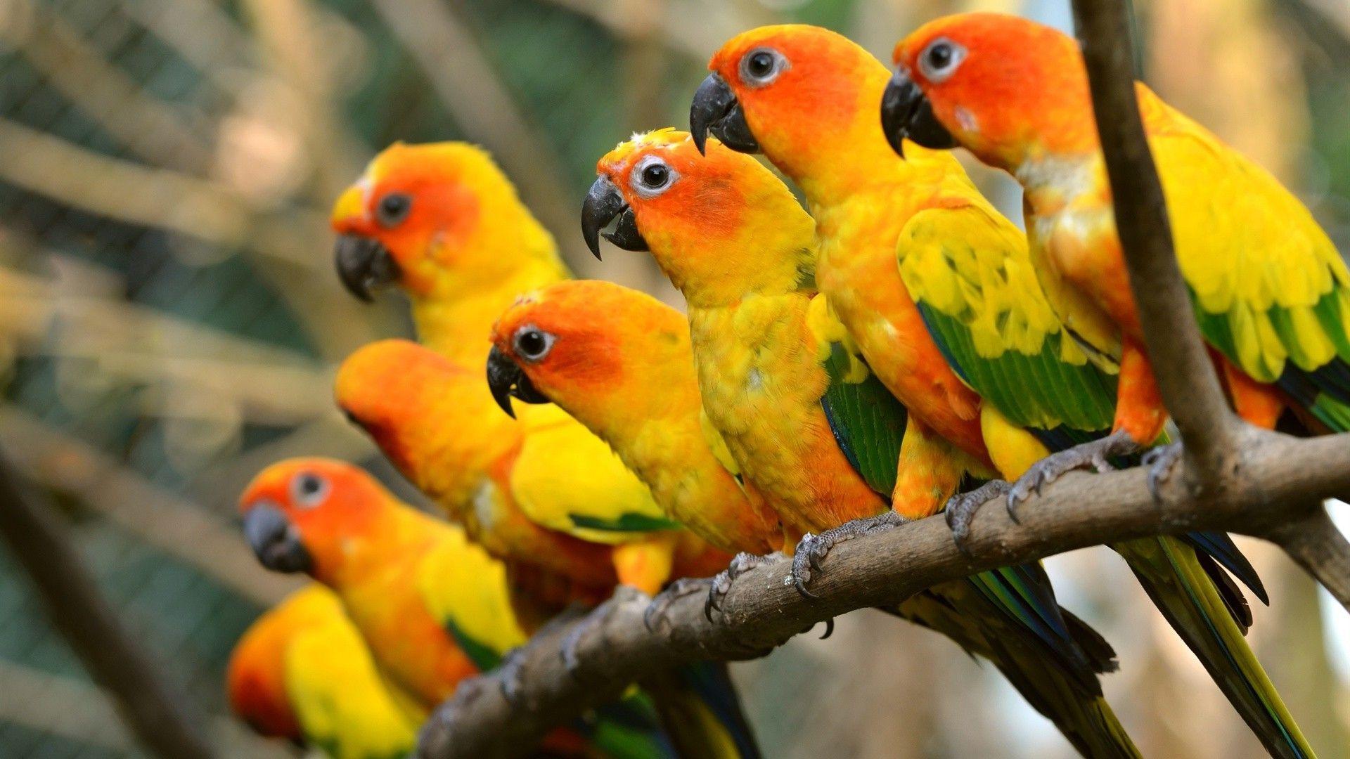 Parrots Aratinga Photo