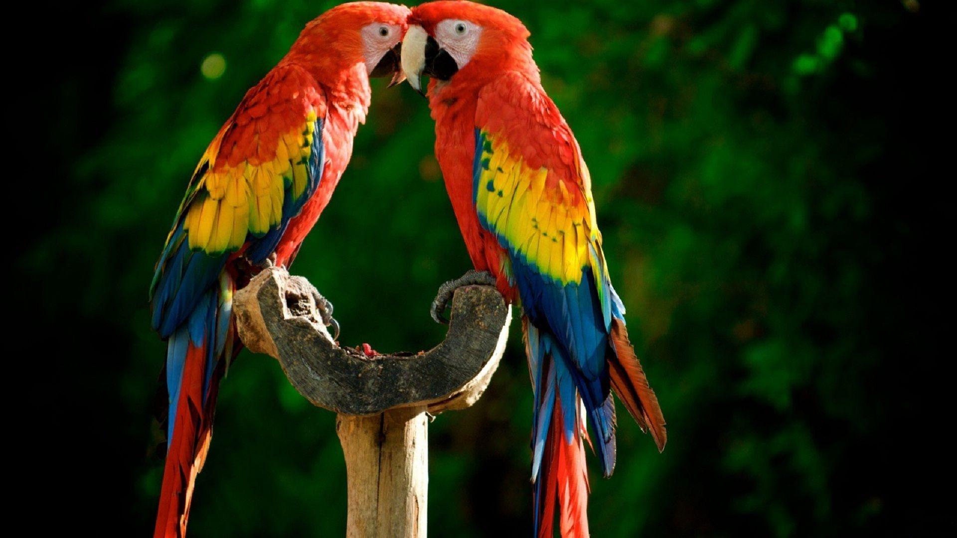Parrots On The Desktop
