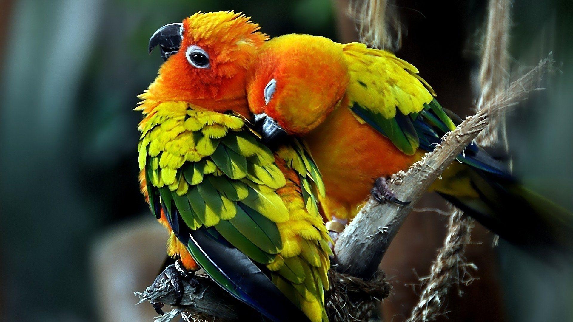 Parrots Photos