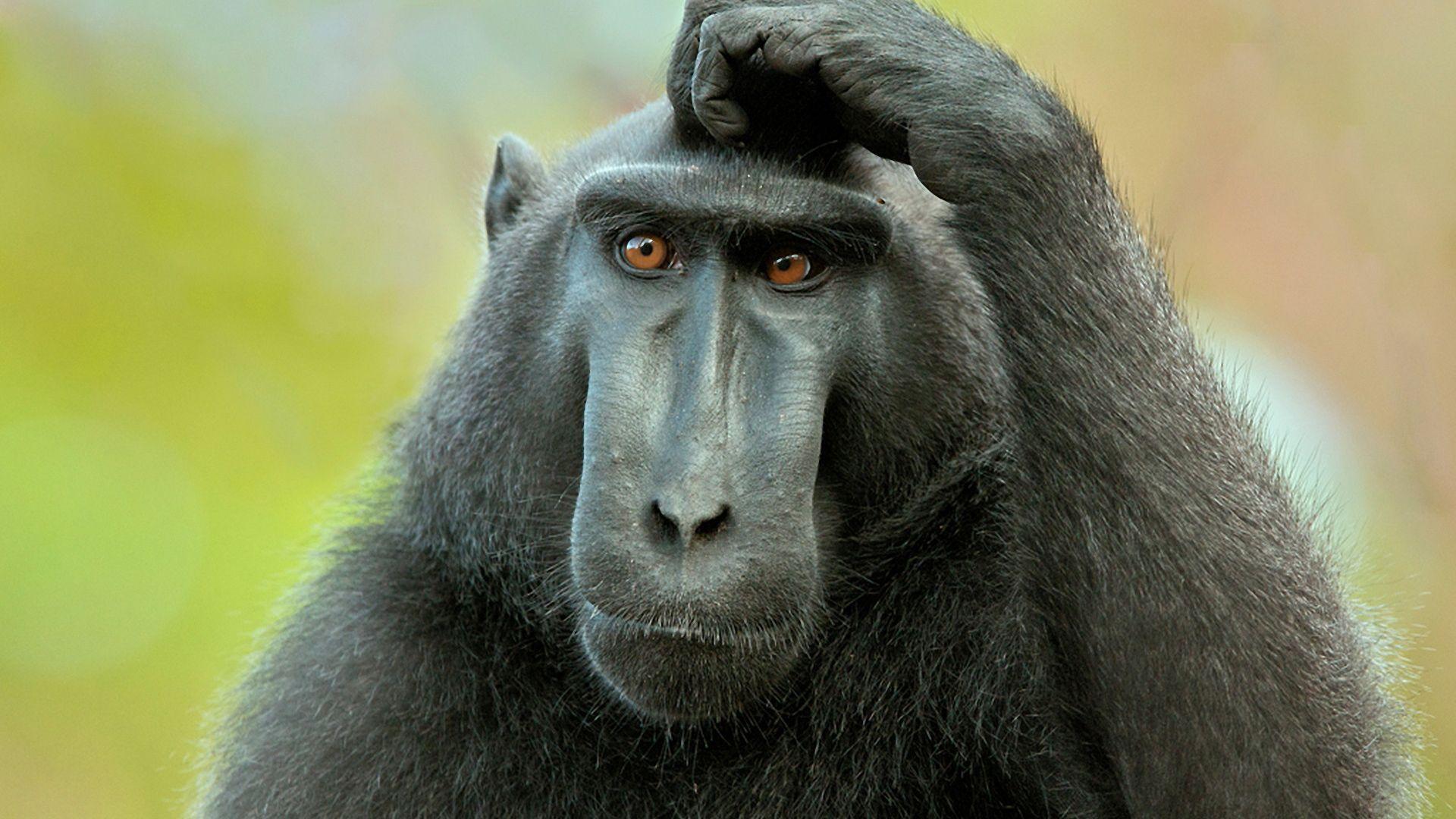 Pensive Monkey Photo