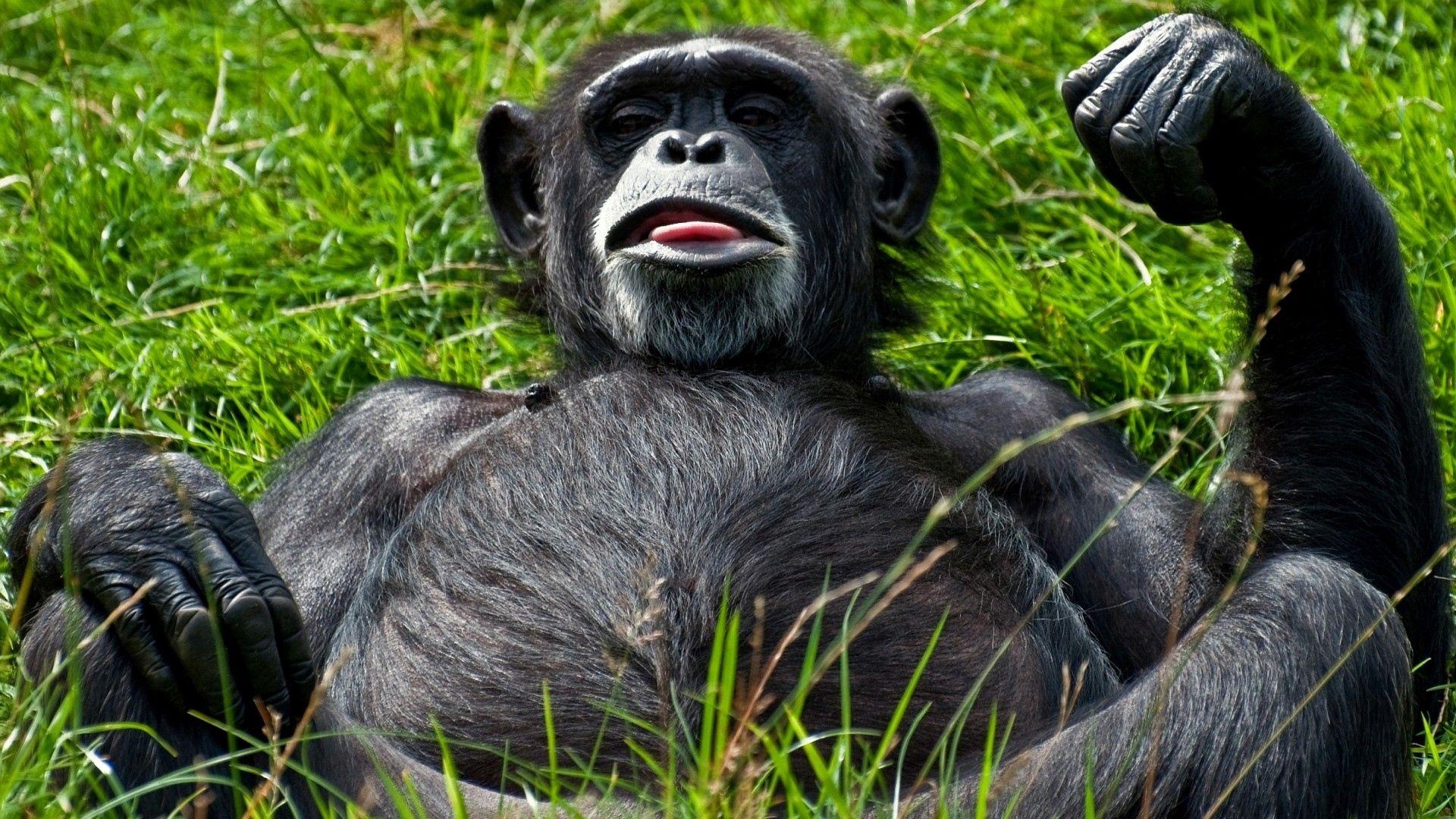 Photo Monkey Funny
