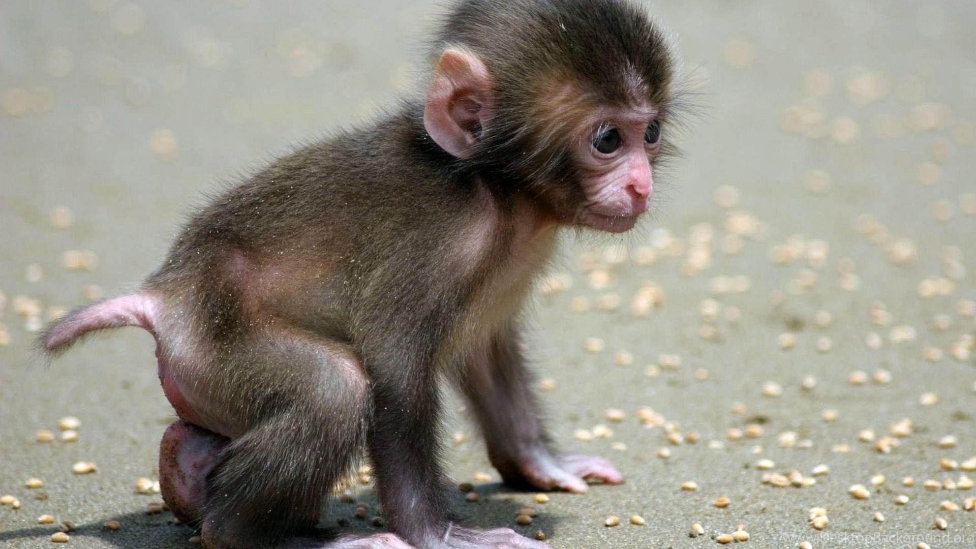 Photo Monkey