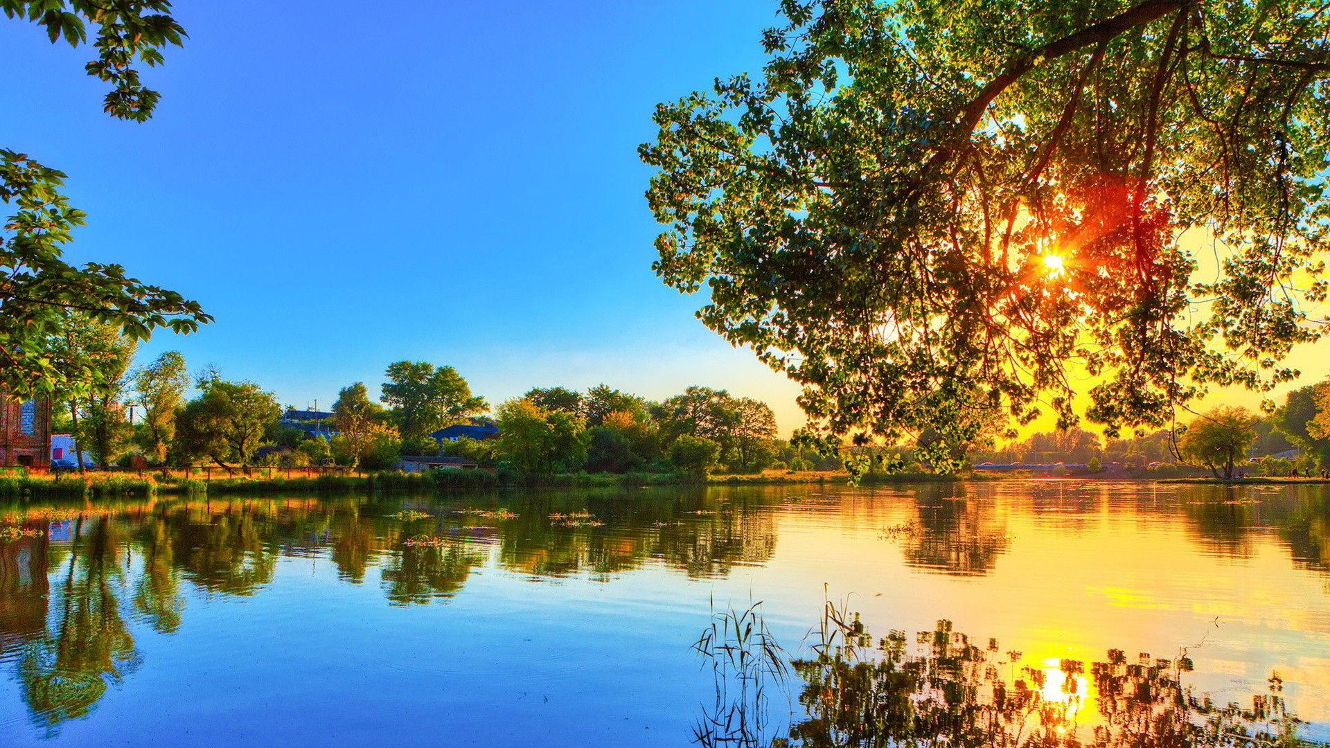 Photo Nature Forest River Lake Sun Flower