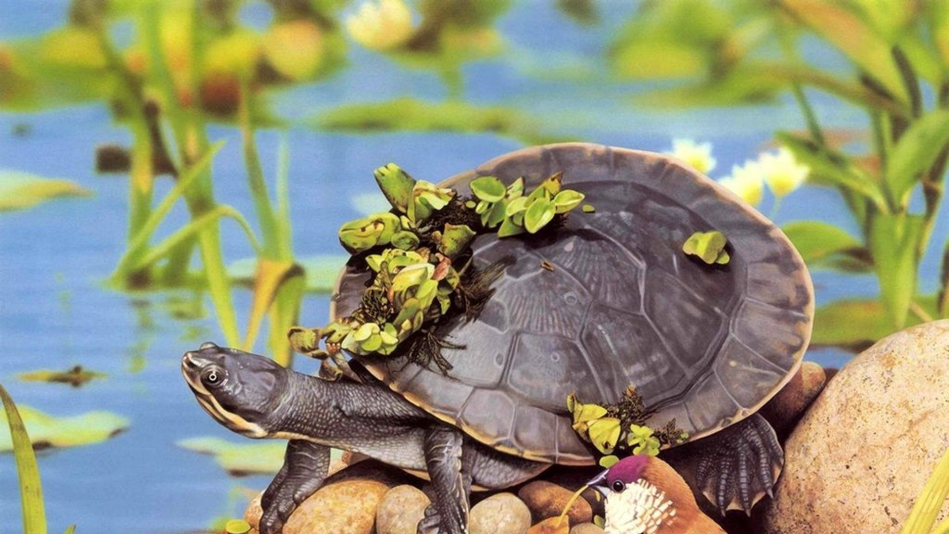 Photo Of A Turtle In Nature