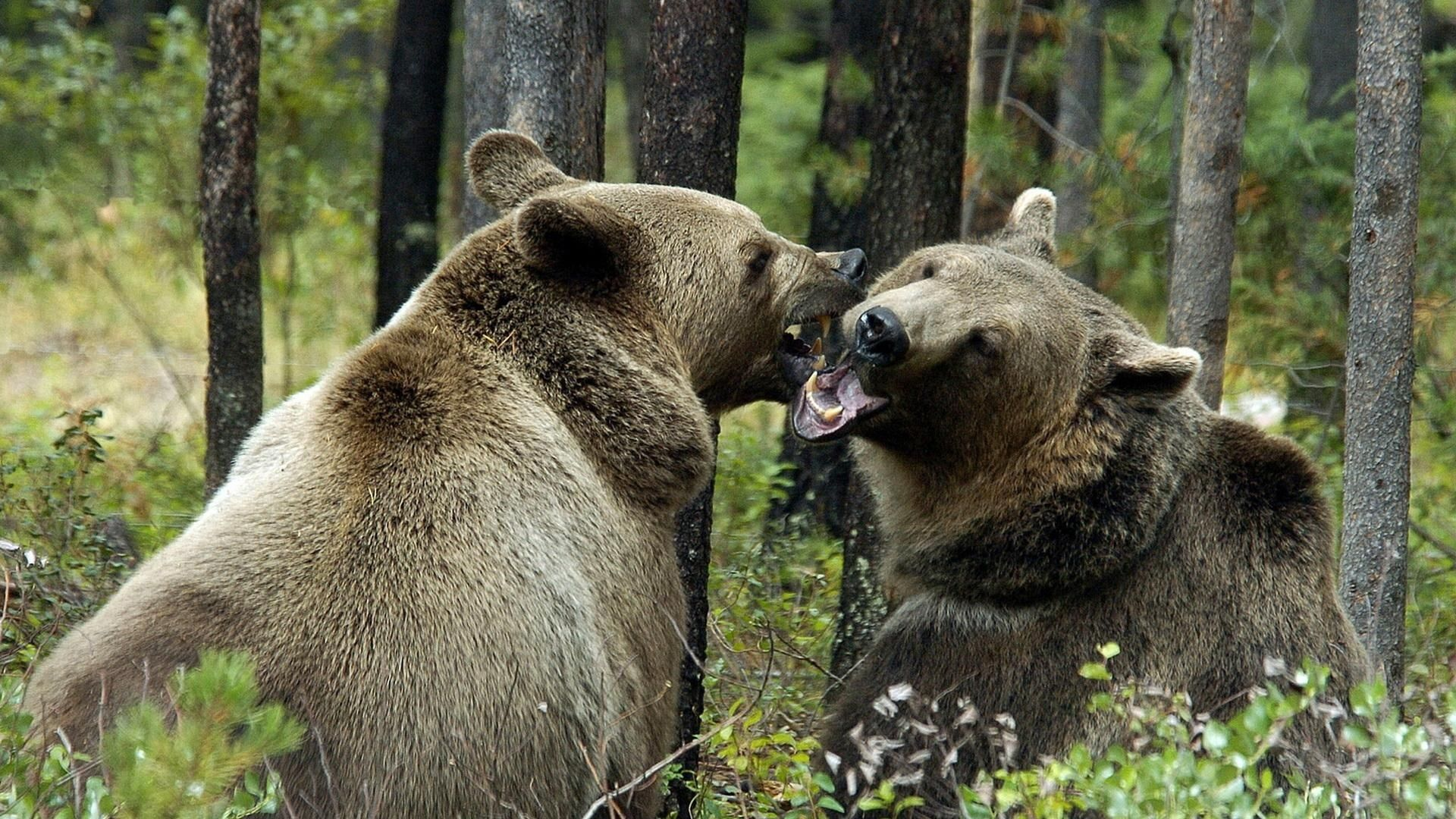 Photo Of Brown Bear In The Woods