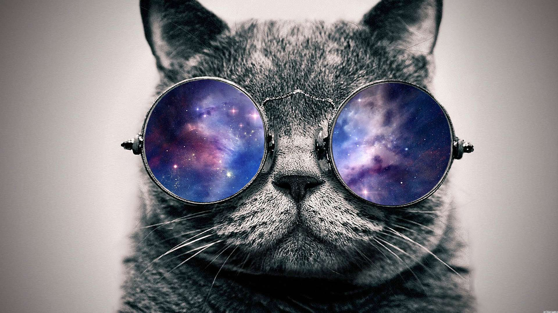 Photo Of Cat With Glasses Space
