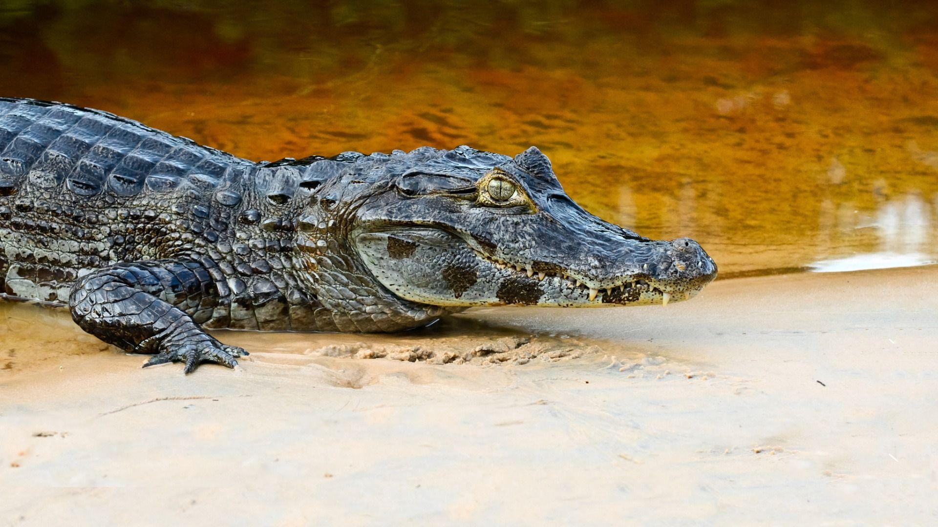 Photo Of Crocodile And Alligator