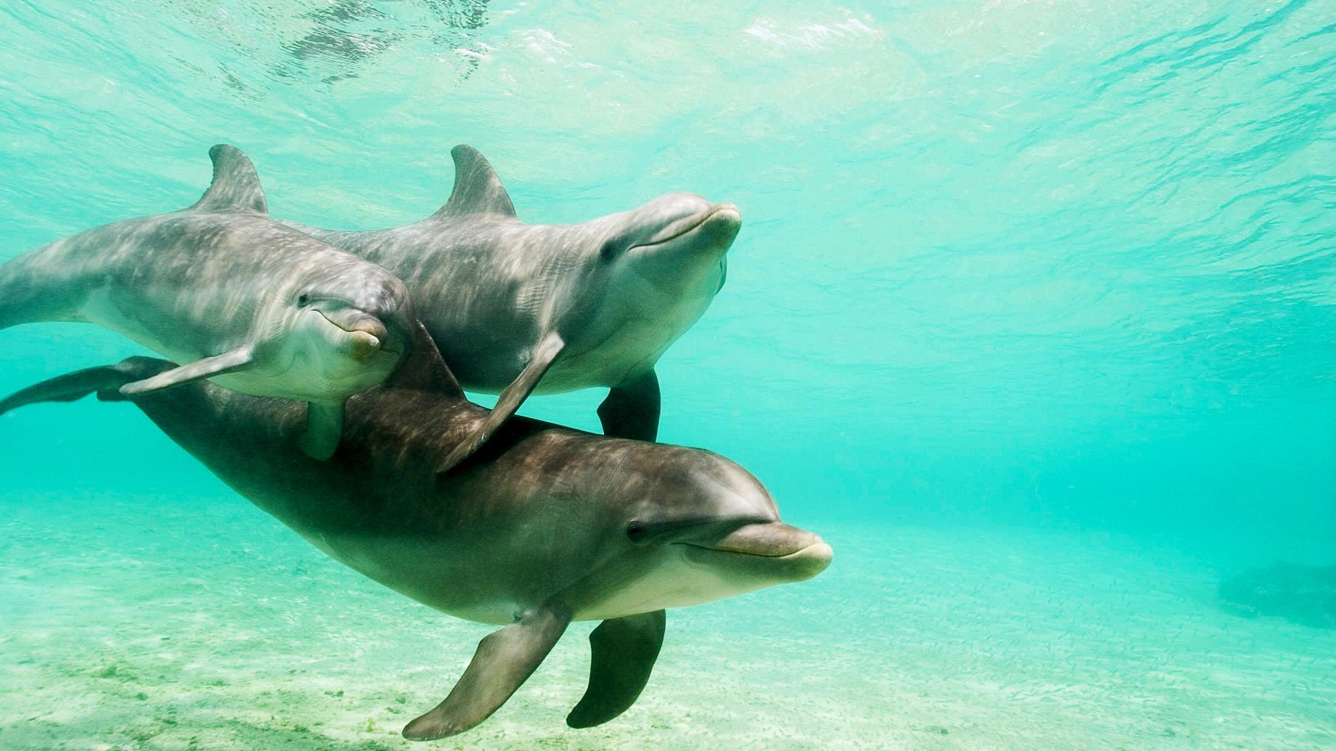 Photo Of Dolphins In The Sea