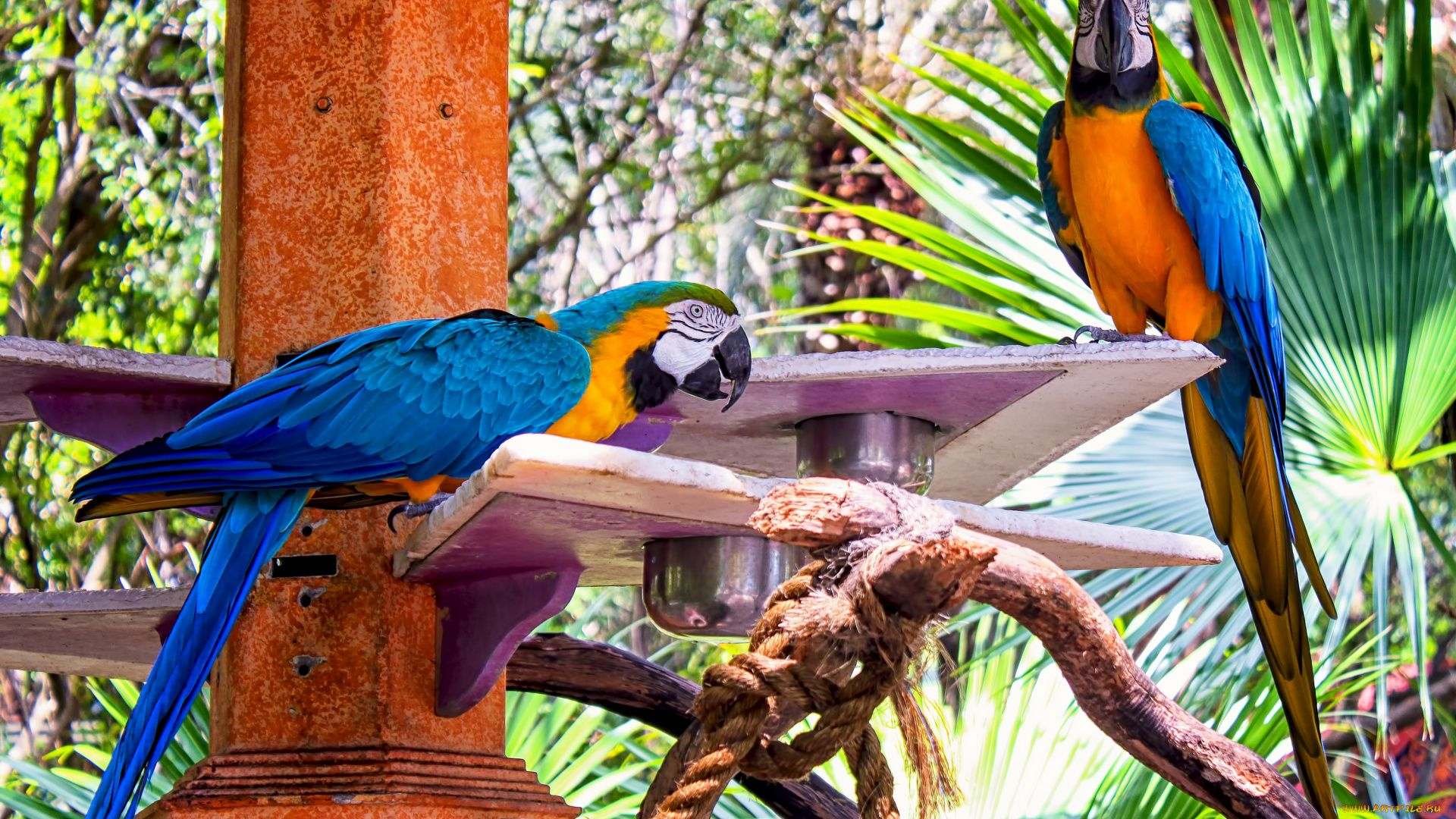 Photo Of Exotic Birds Macaw