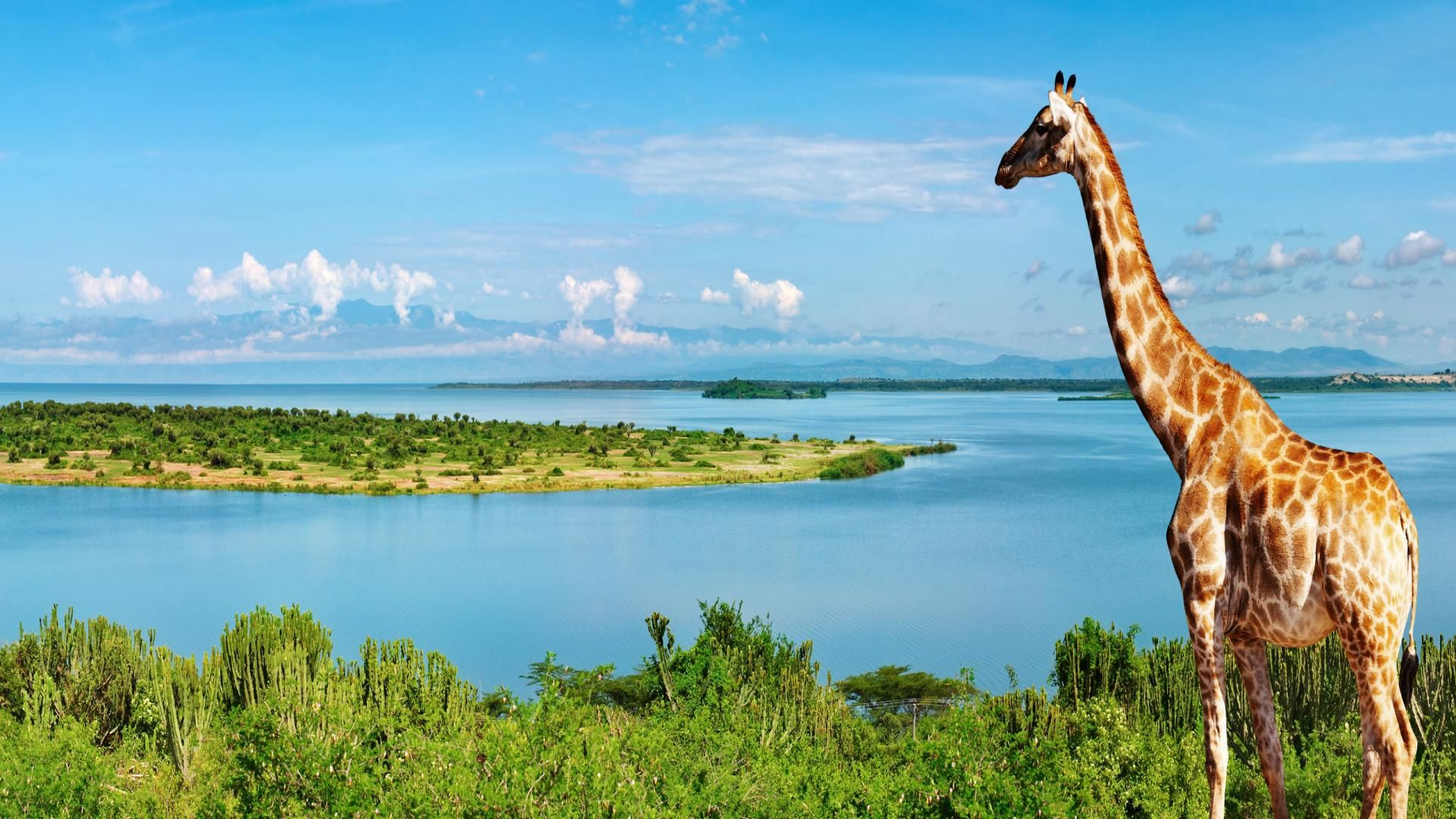 Photo Of The Nile River In Africa