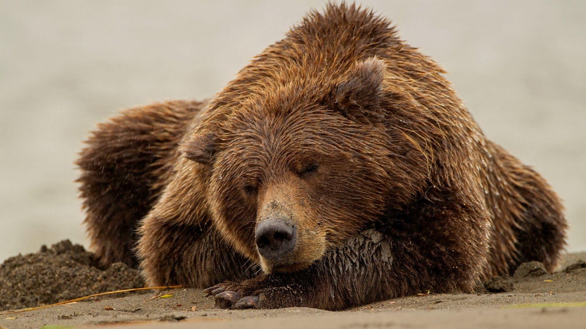 Photo Of The Sleeping Bear