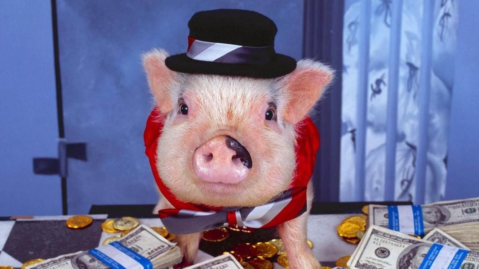 Photo Pig With Money