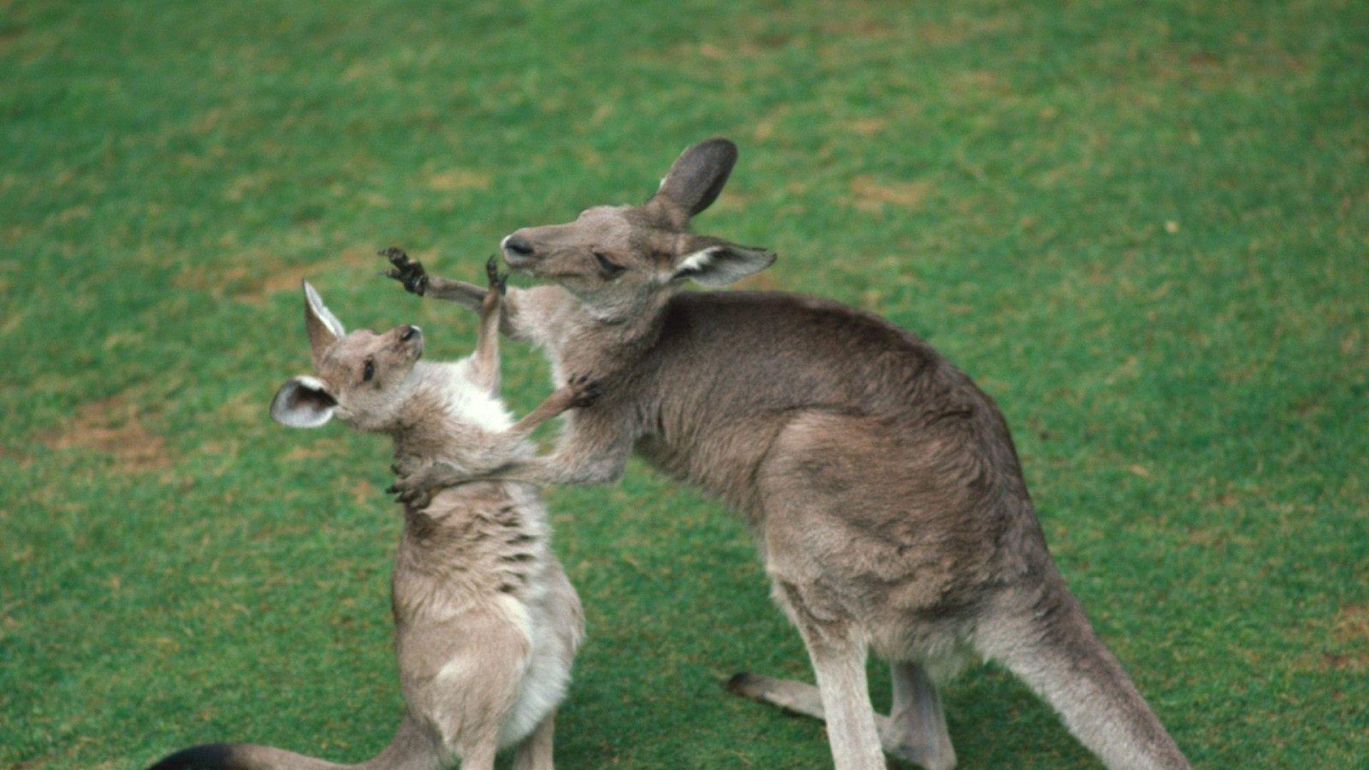 Photo With A Baby Kangaroo