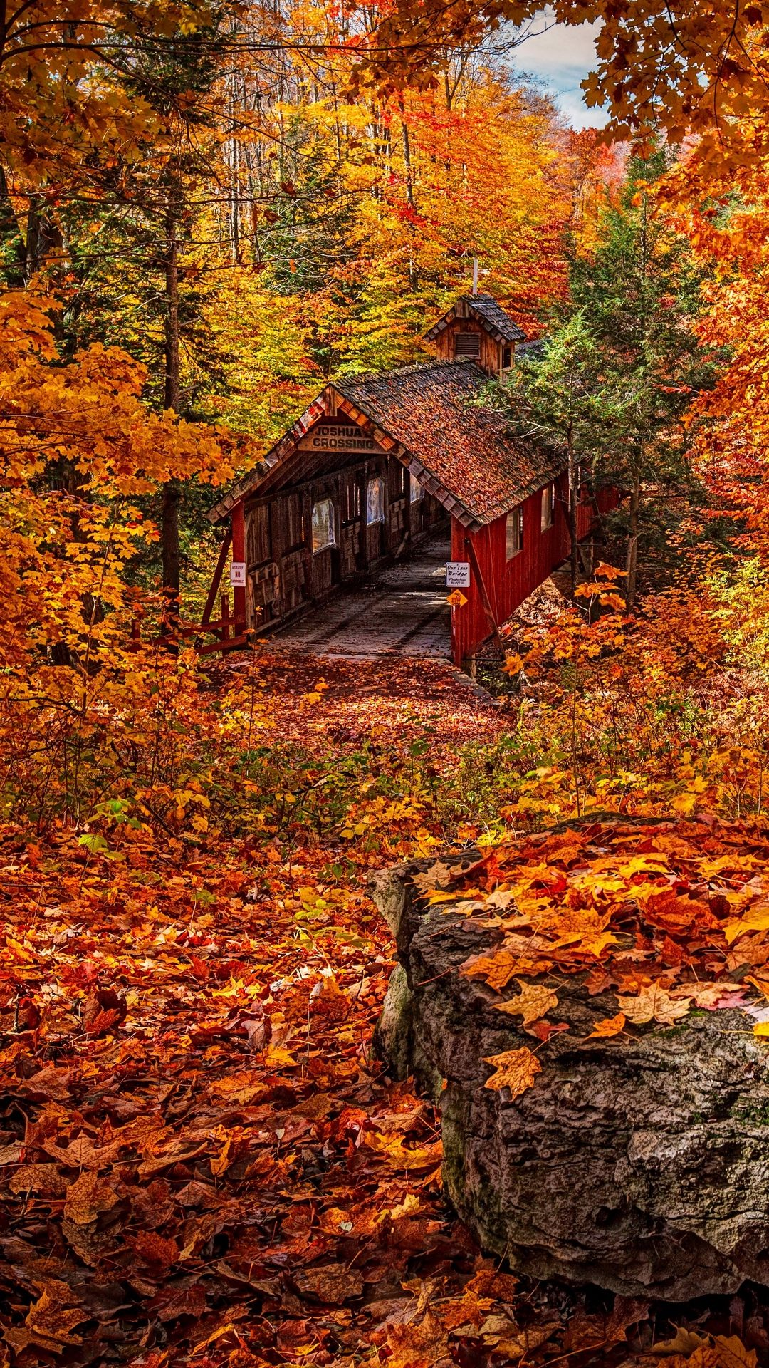 Photos Leaf Fall In Autumn