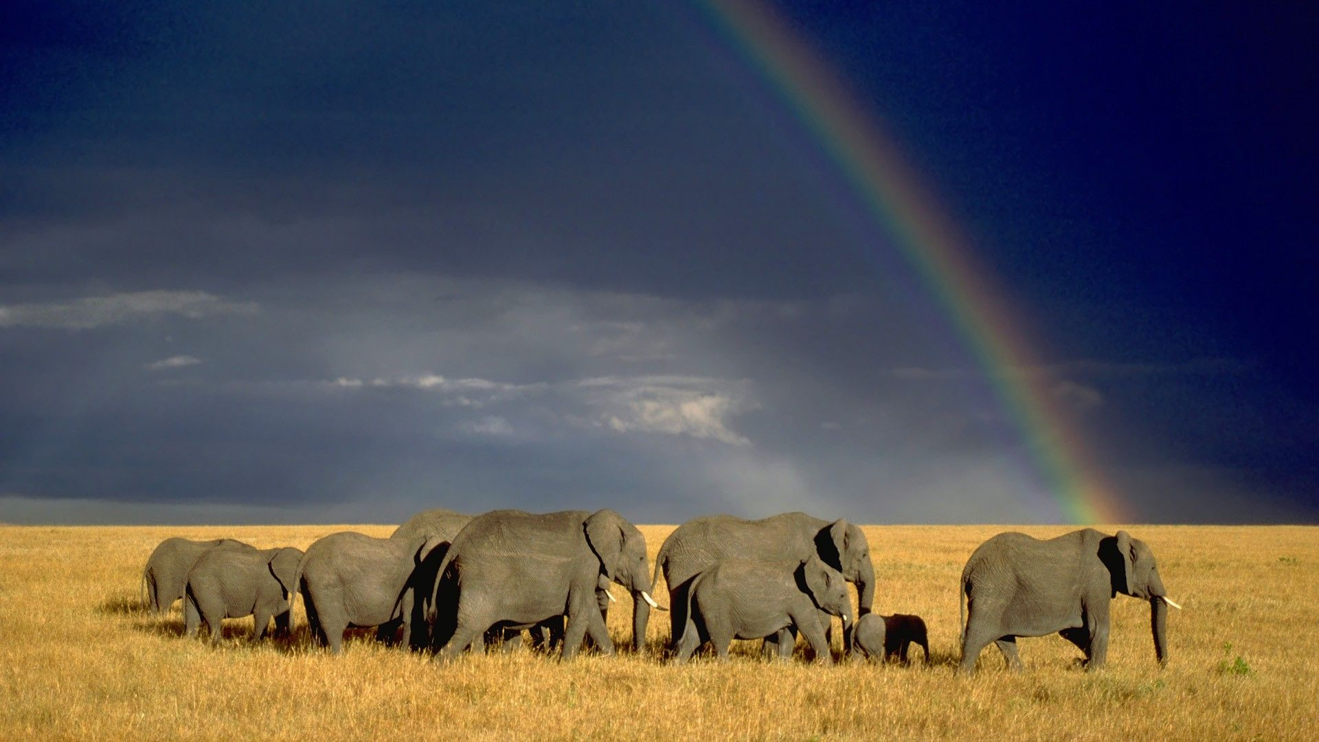 Photos Of Africa High Quality