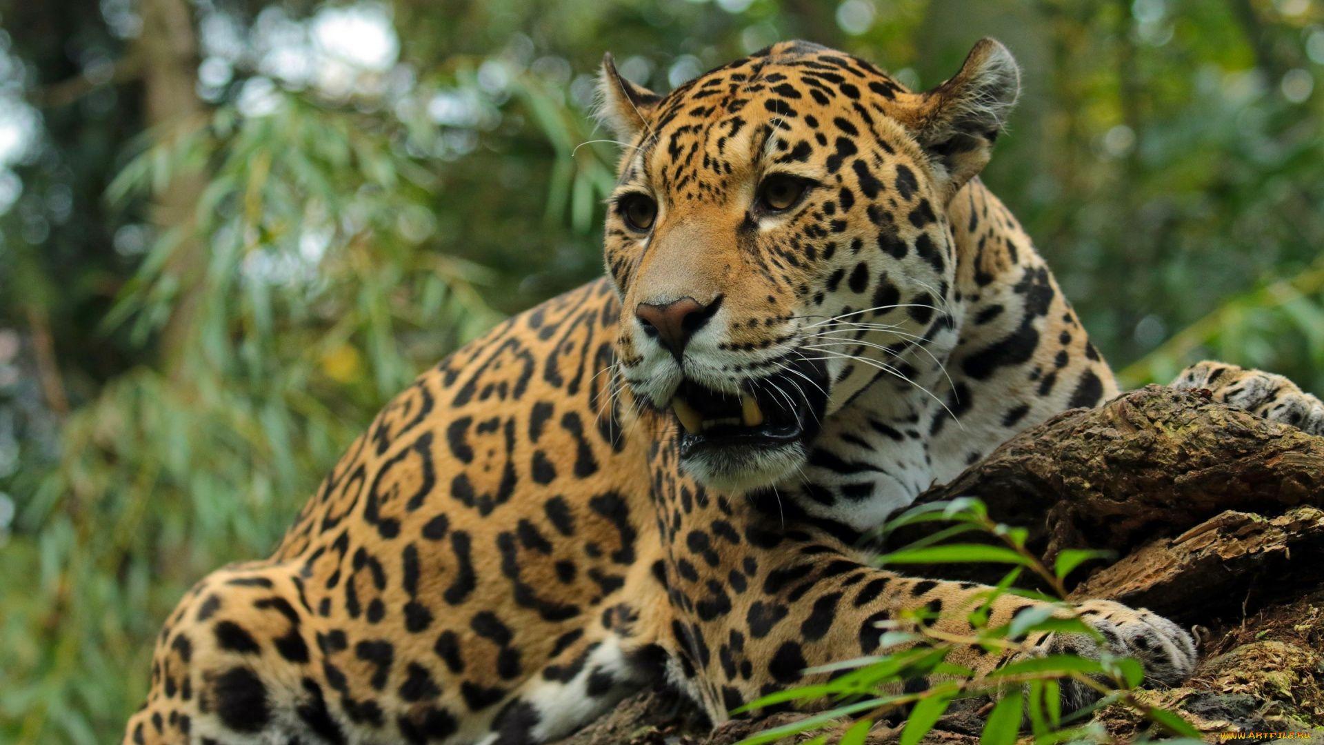 Photos Of Jaguar Vertical