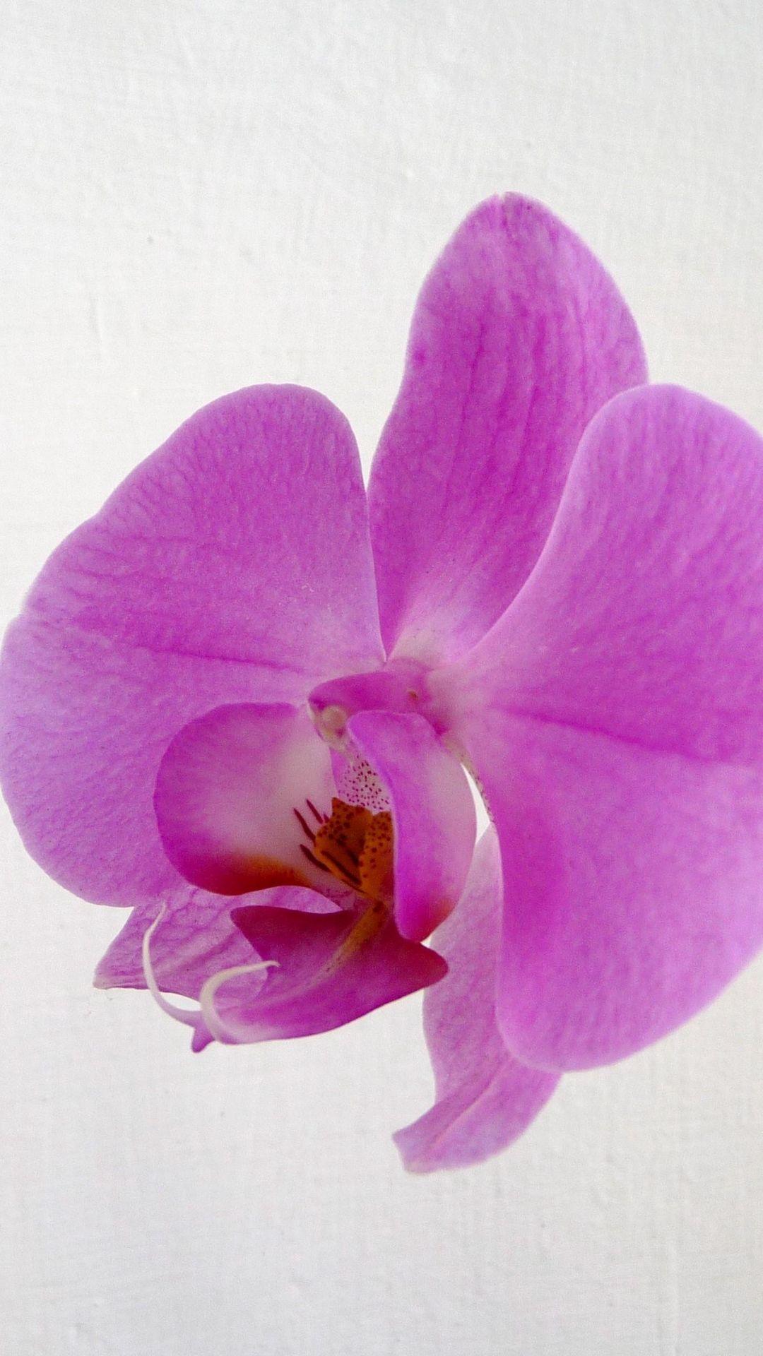 Photos Of Orchid Closeup