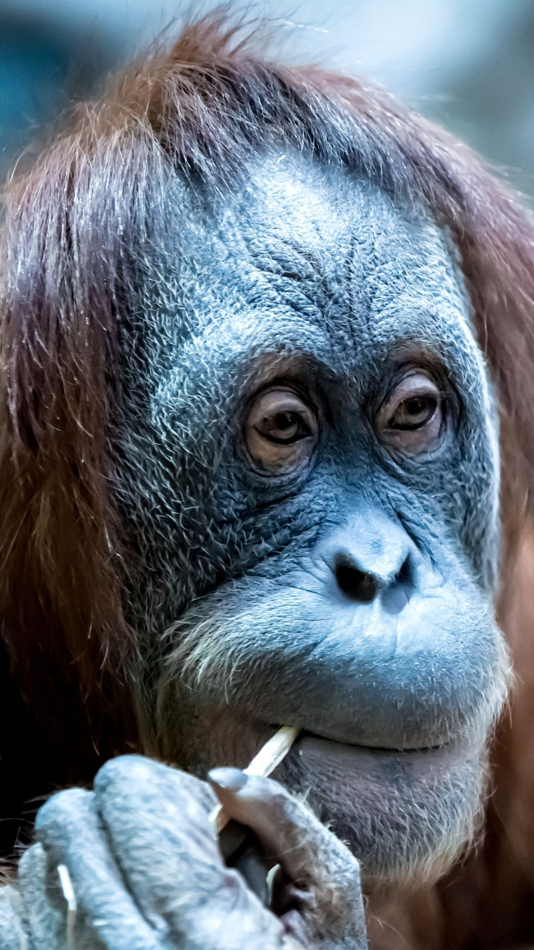 Photos Of Monkeys Funny