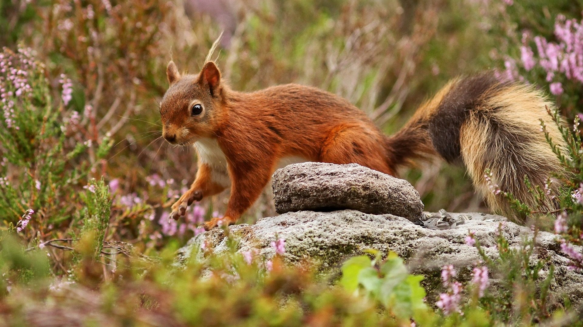 Photos Of Squirrels In The Woods