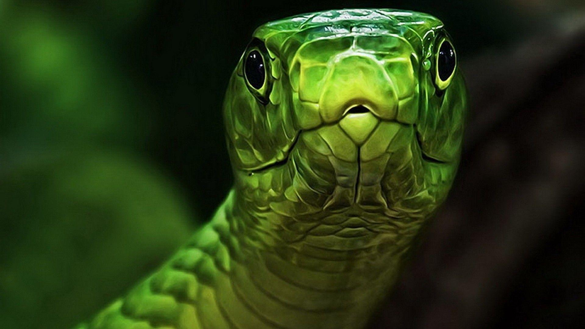 Photos Snakes On Desk
