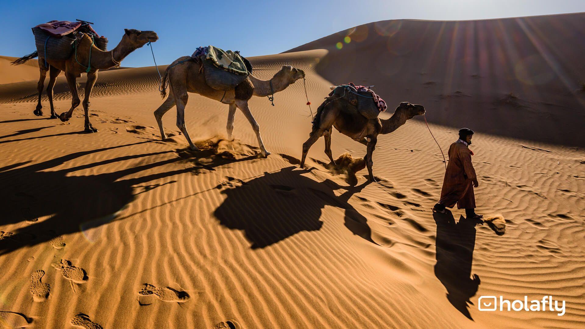 Picture Africa Desert Camel