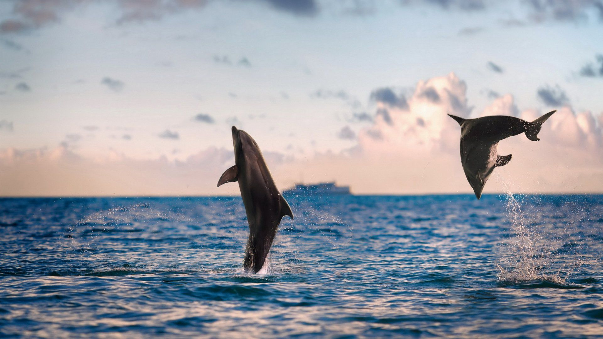 Picture Nature Sea Dolphins