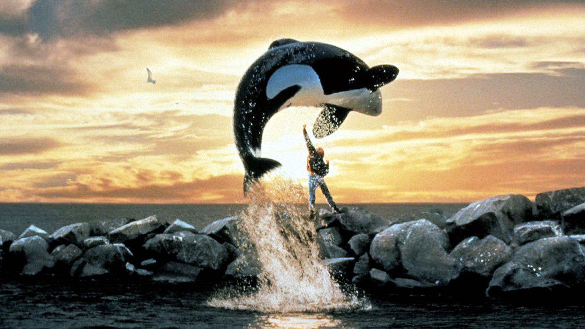 Pictures Free Willy