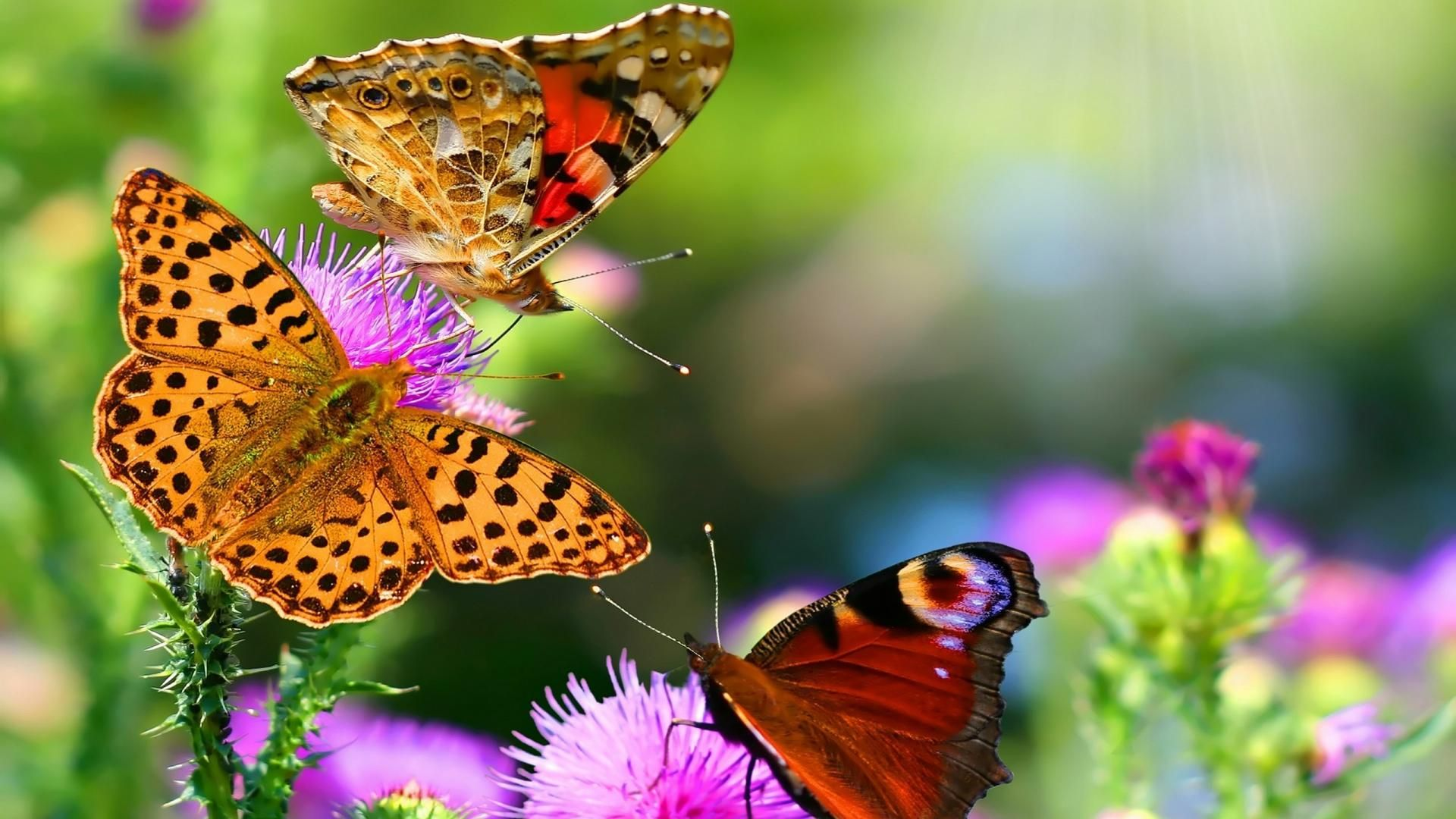 Pictures Of Butterflies Are Beautiful