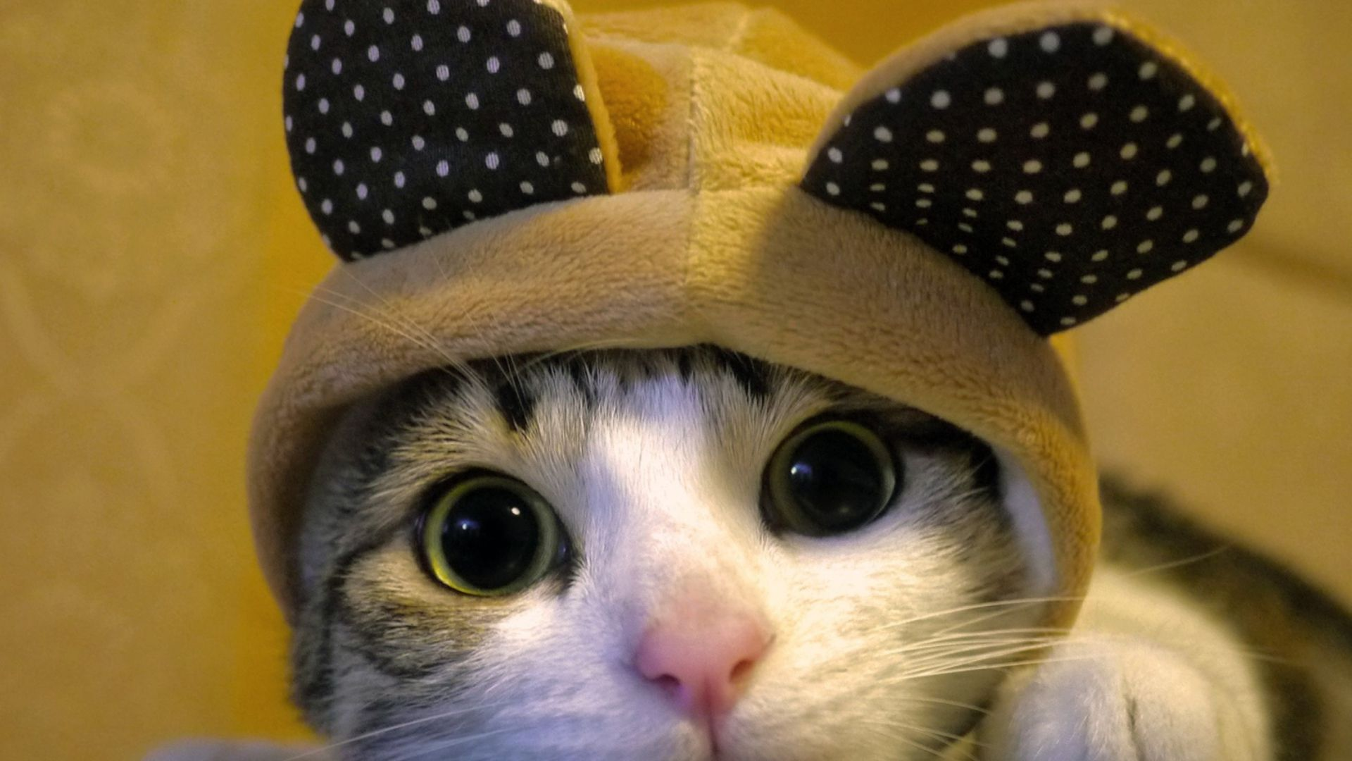 Pictures Of Cats Cute And Sweet