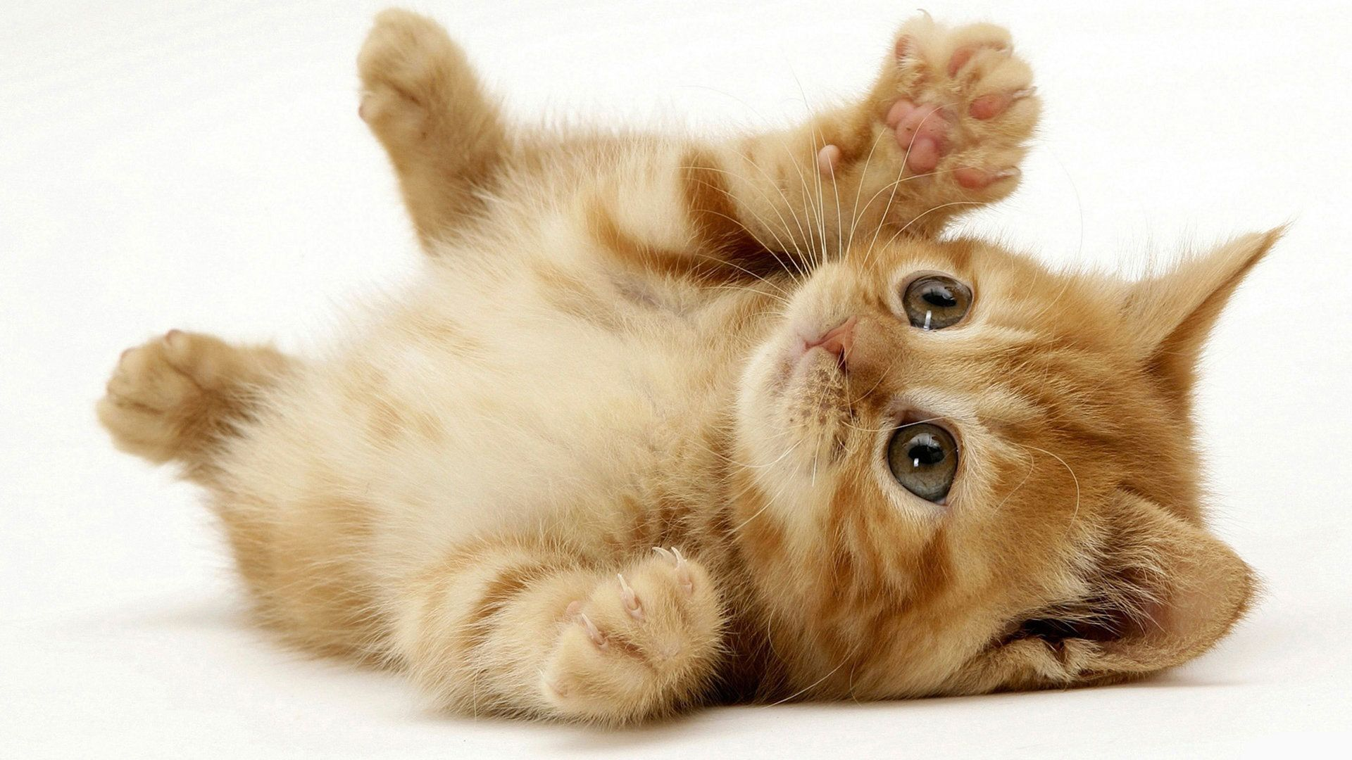 Pictures Of Cats Cute Beautiful
