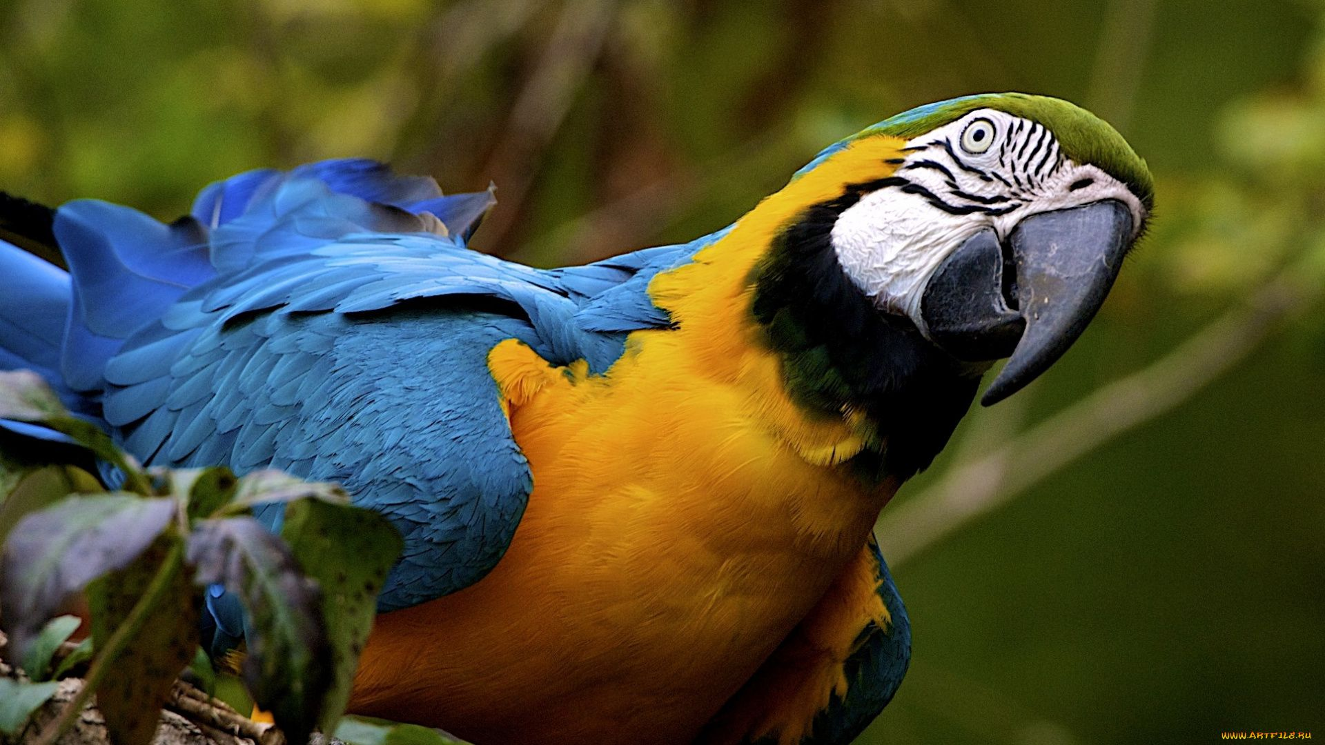 Pictures Of Different Parrots