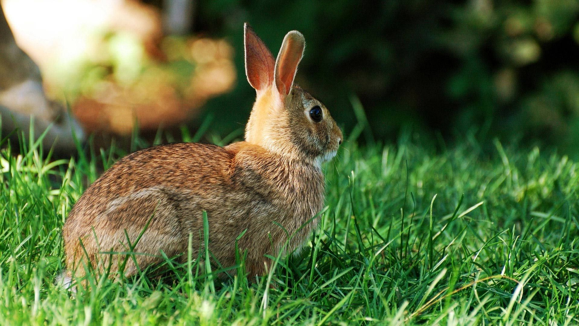 Pictures Of Hares And Rabbits