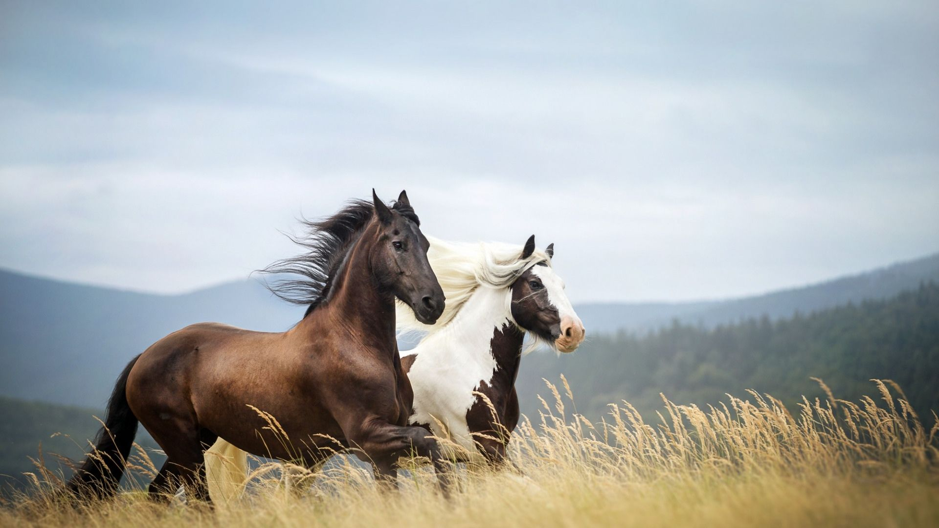 Pictures Of Horses In The Nature