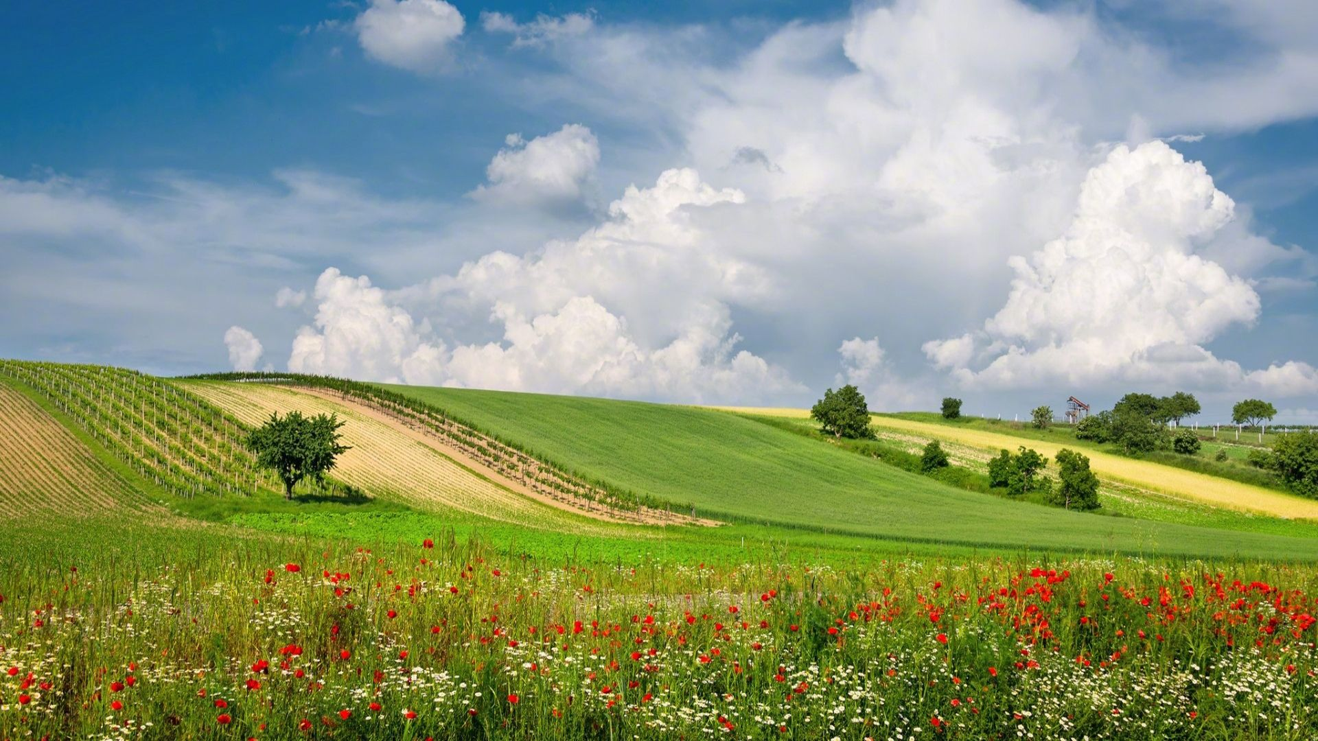 Pictures Of Nature With Fields And Meadows