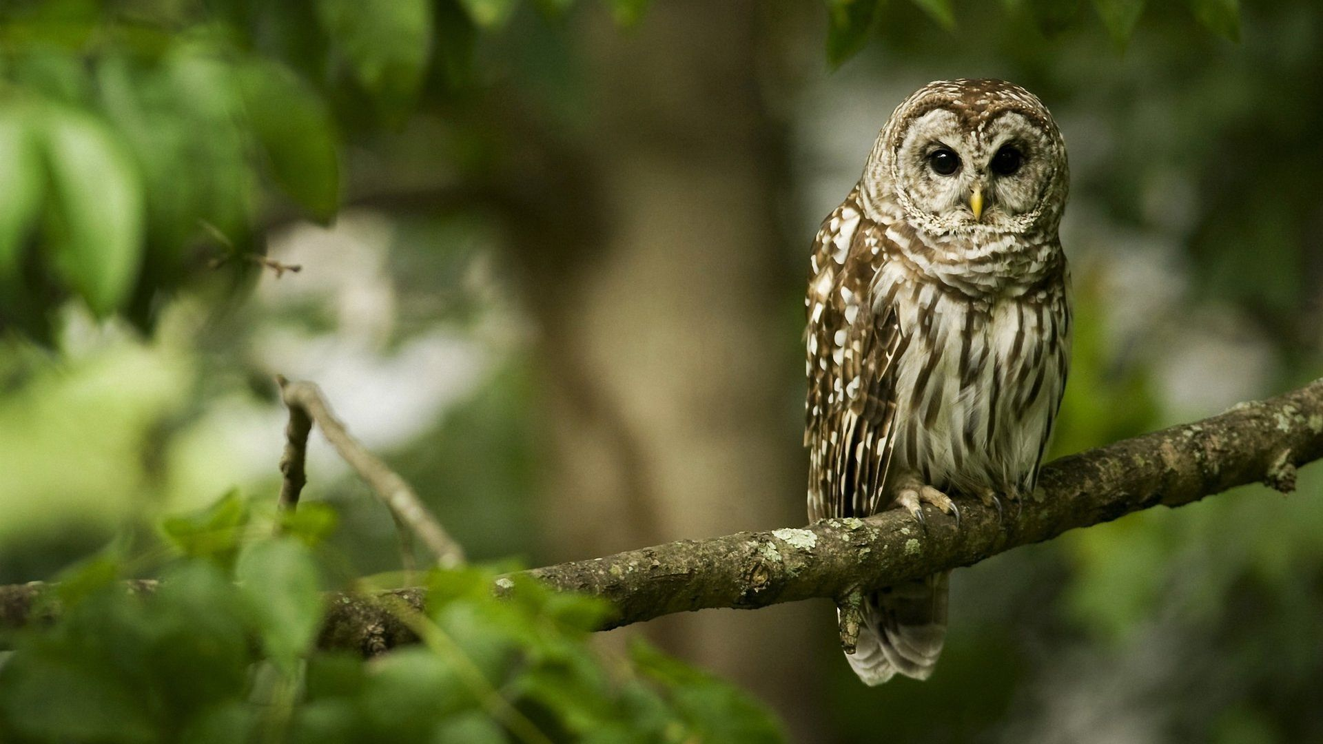 Pictures Of Owls On The Branch