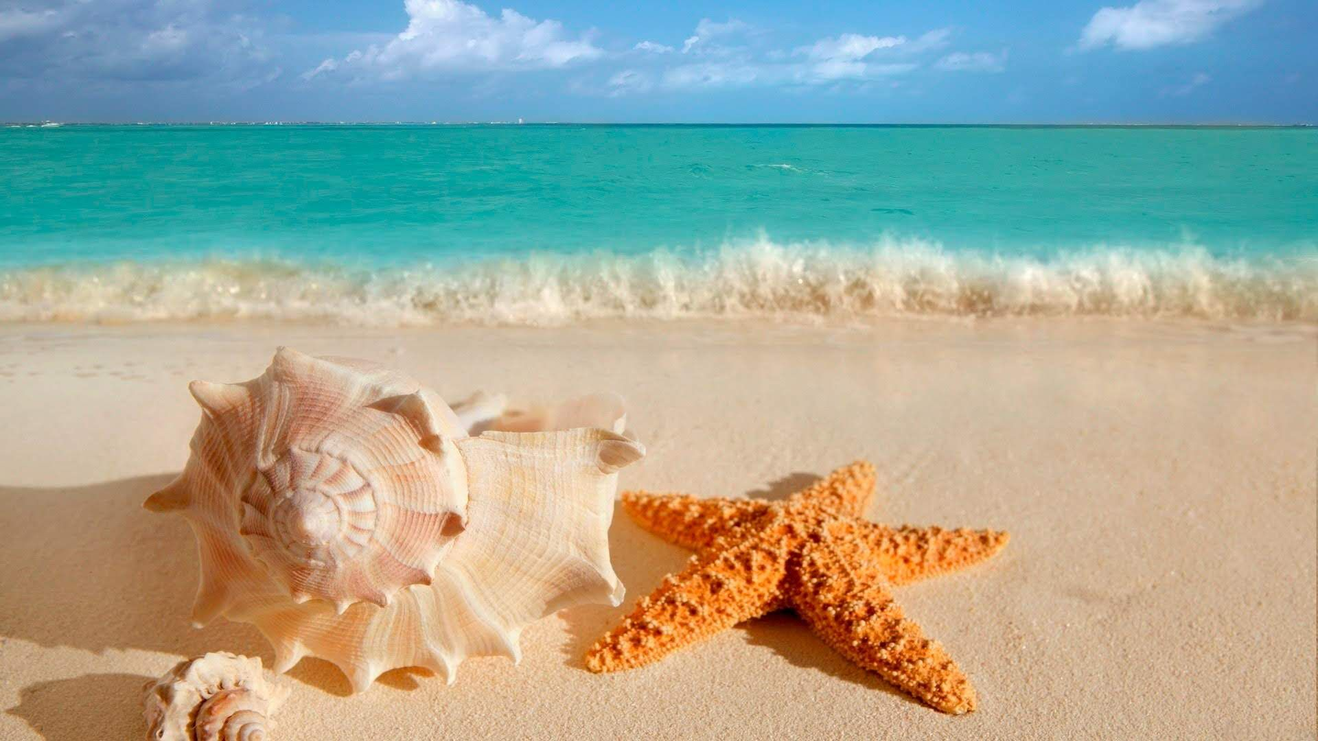 Pictures Of Shells And Starfish