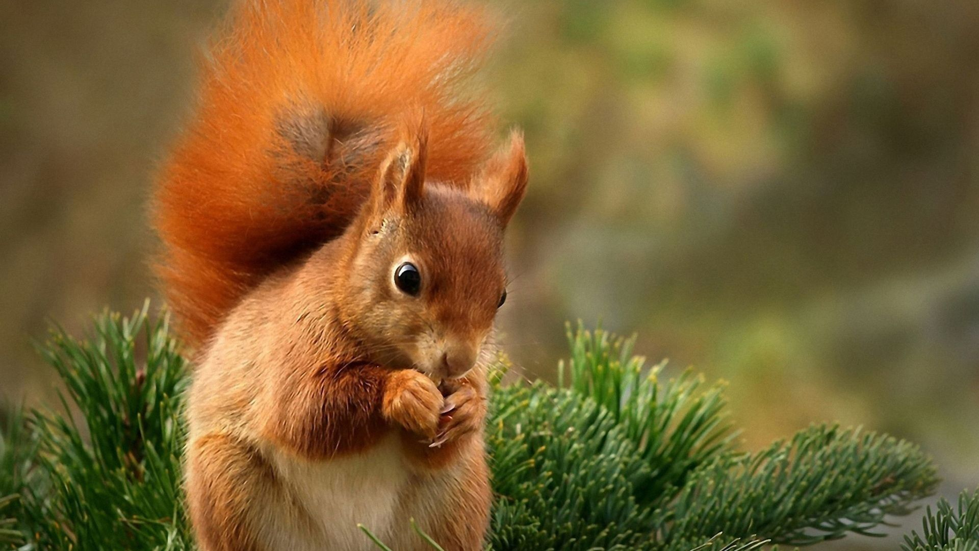 Pictures Of Squirrels