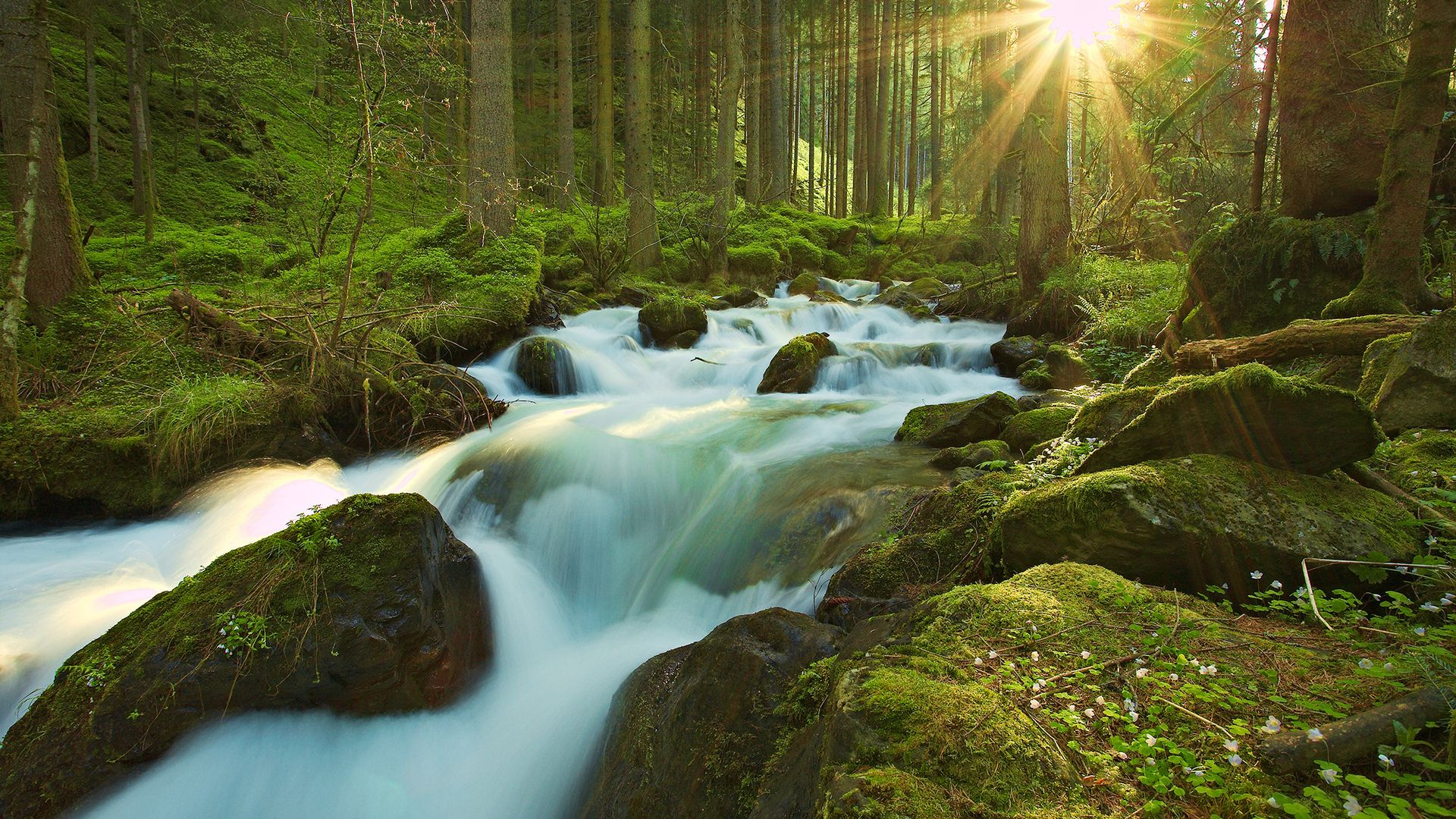 Pictures Of The Beautiful Streams